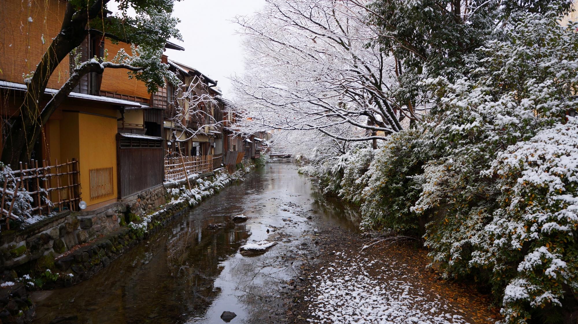 川辺の木々や植物も白くそまる祇園白川
