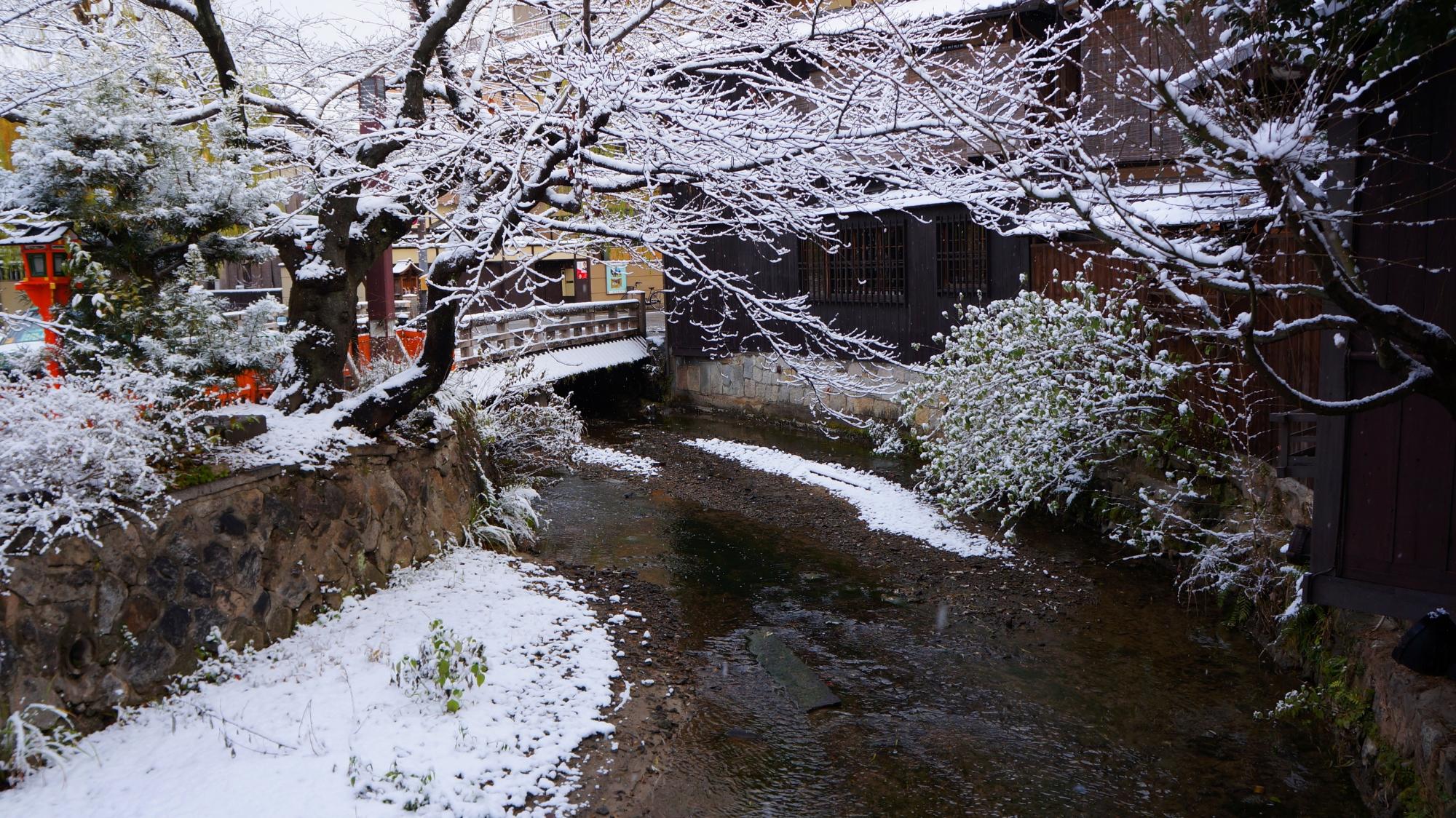 落ち着いた雰囲気の中に咲く華やかな雪の花