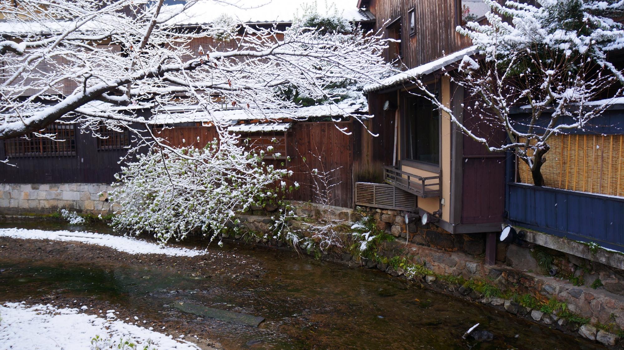 木の枝の先まで雪がびっしり積もった祇園白川