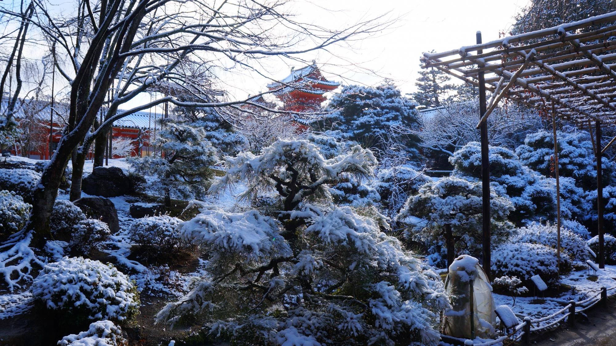 雪化粧した神苑のたくさんの木々や植物