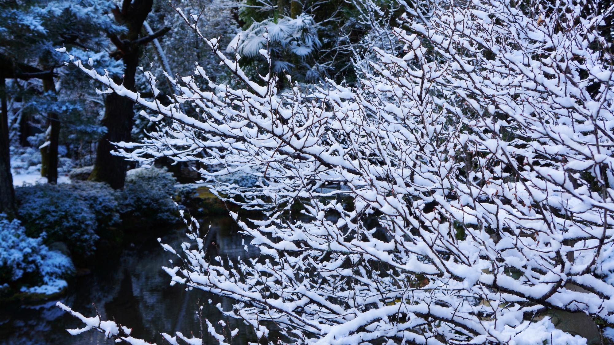 平安神宮神苑の華やかな雪の花