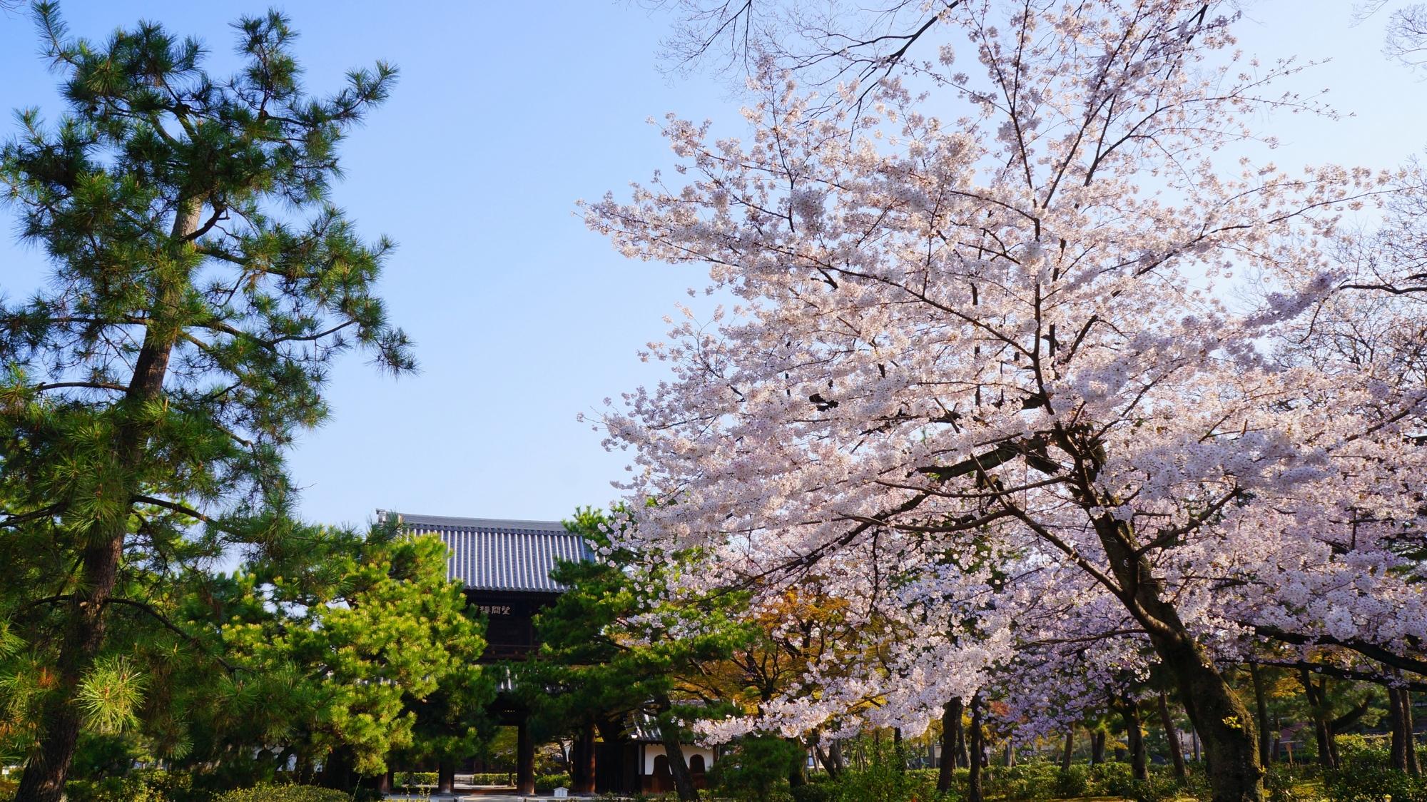 建仁寺の三門と桜