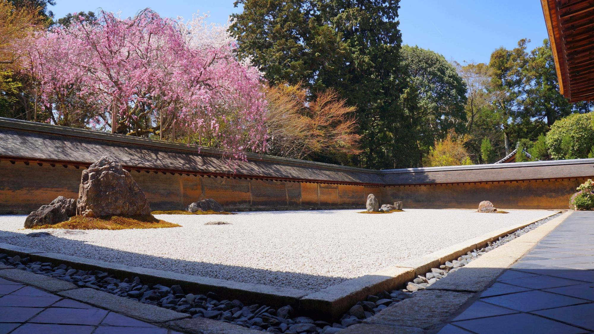 有名な龍安寺の石庭と桜