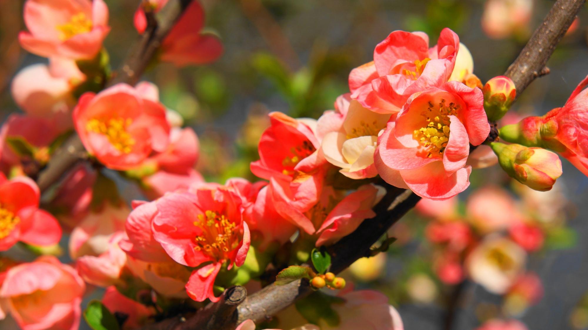 春の鏡容池を彩る多種多様な花々