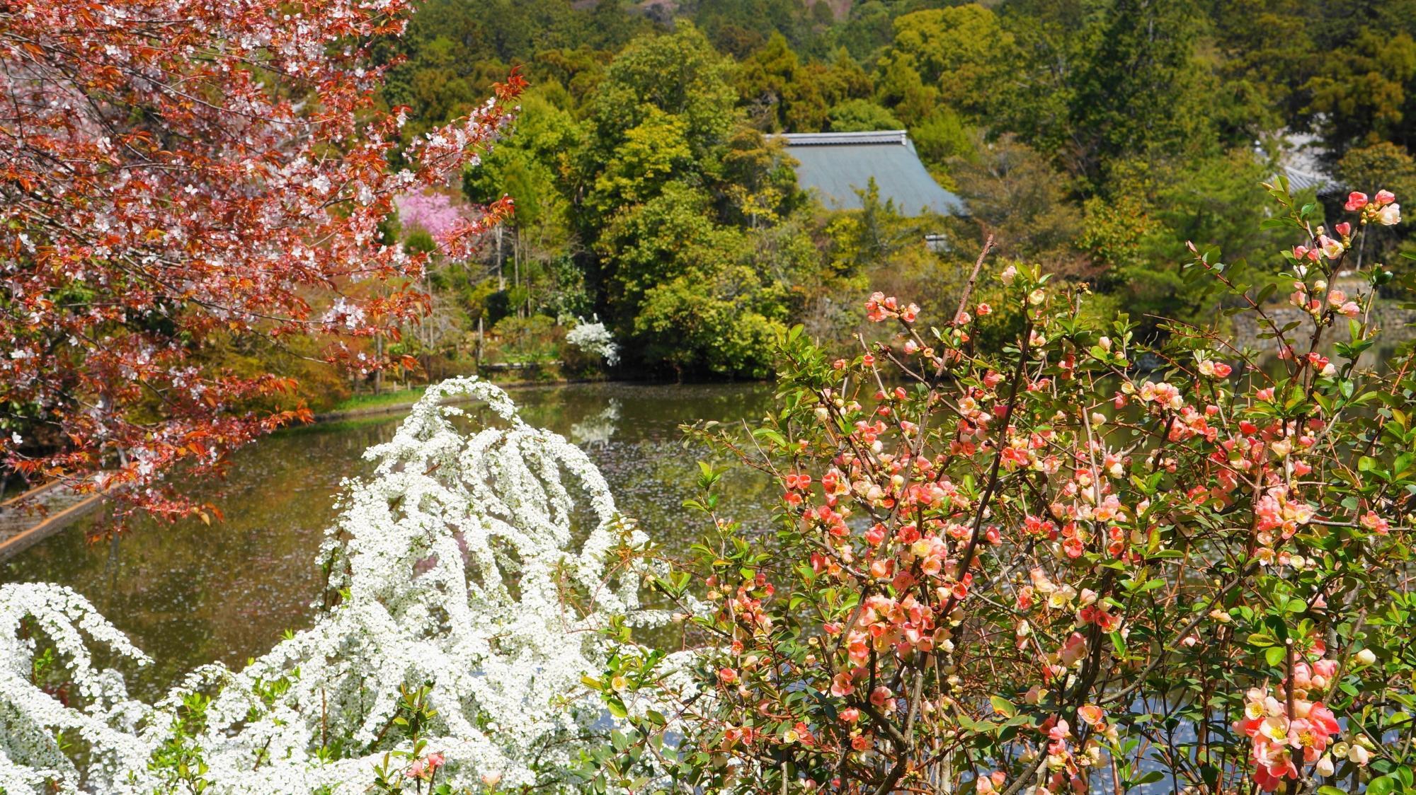 水辺を色とりどりに彩る春の花々