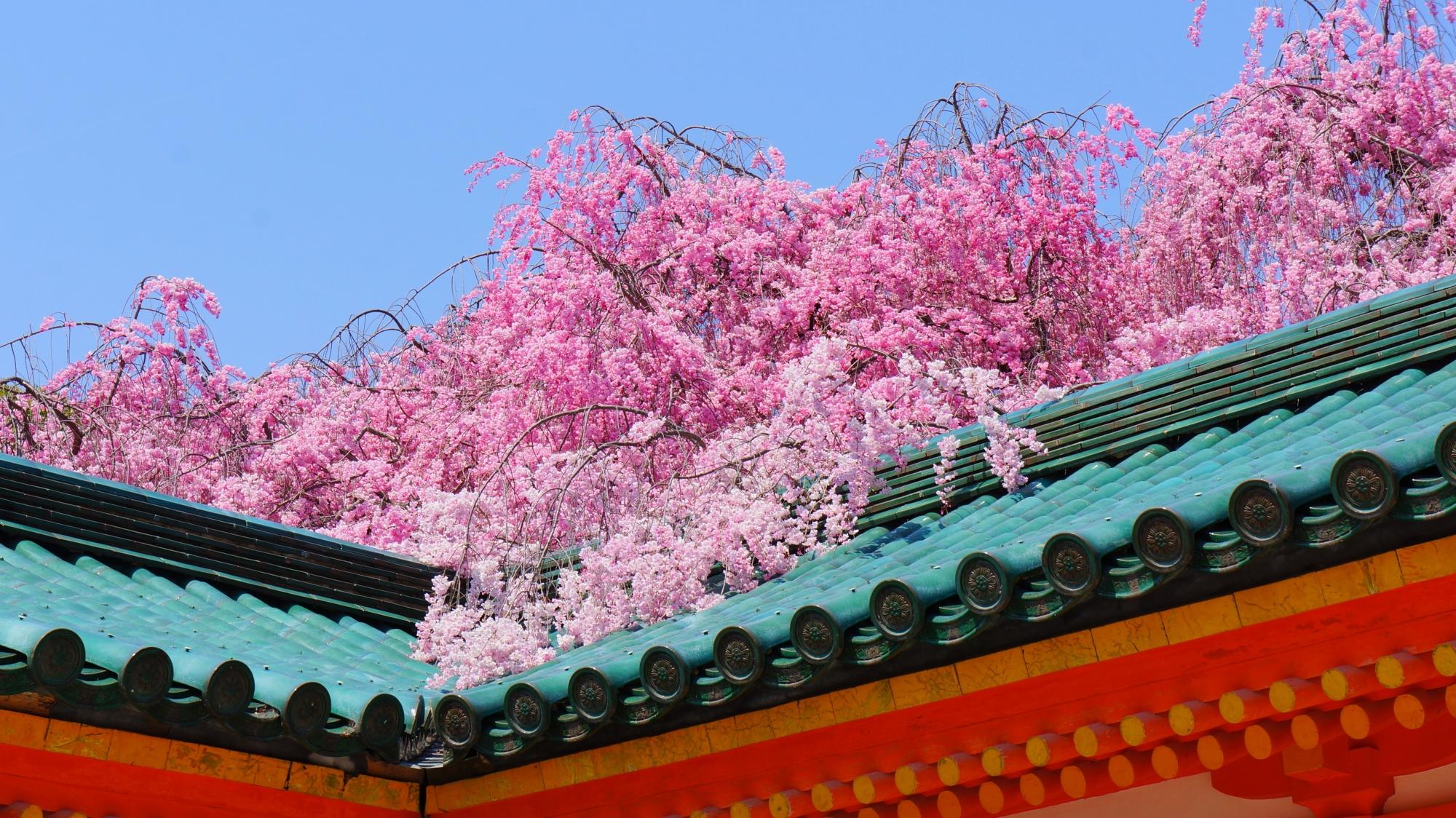 鮮やかな色合いの屋根を彩るピンクのしだれ桜