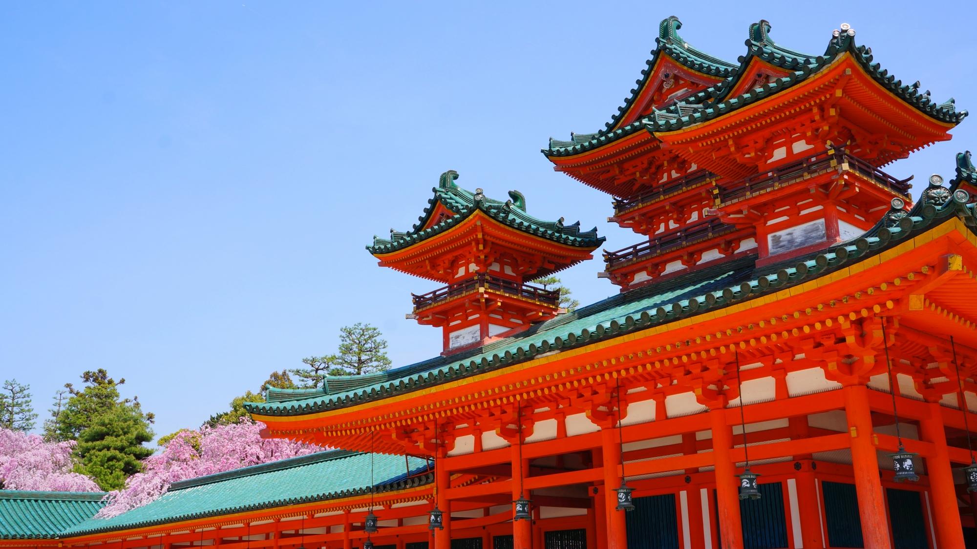 最高の青空の下の格式高い見事な桜