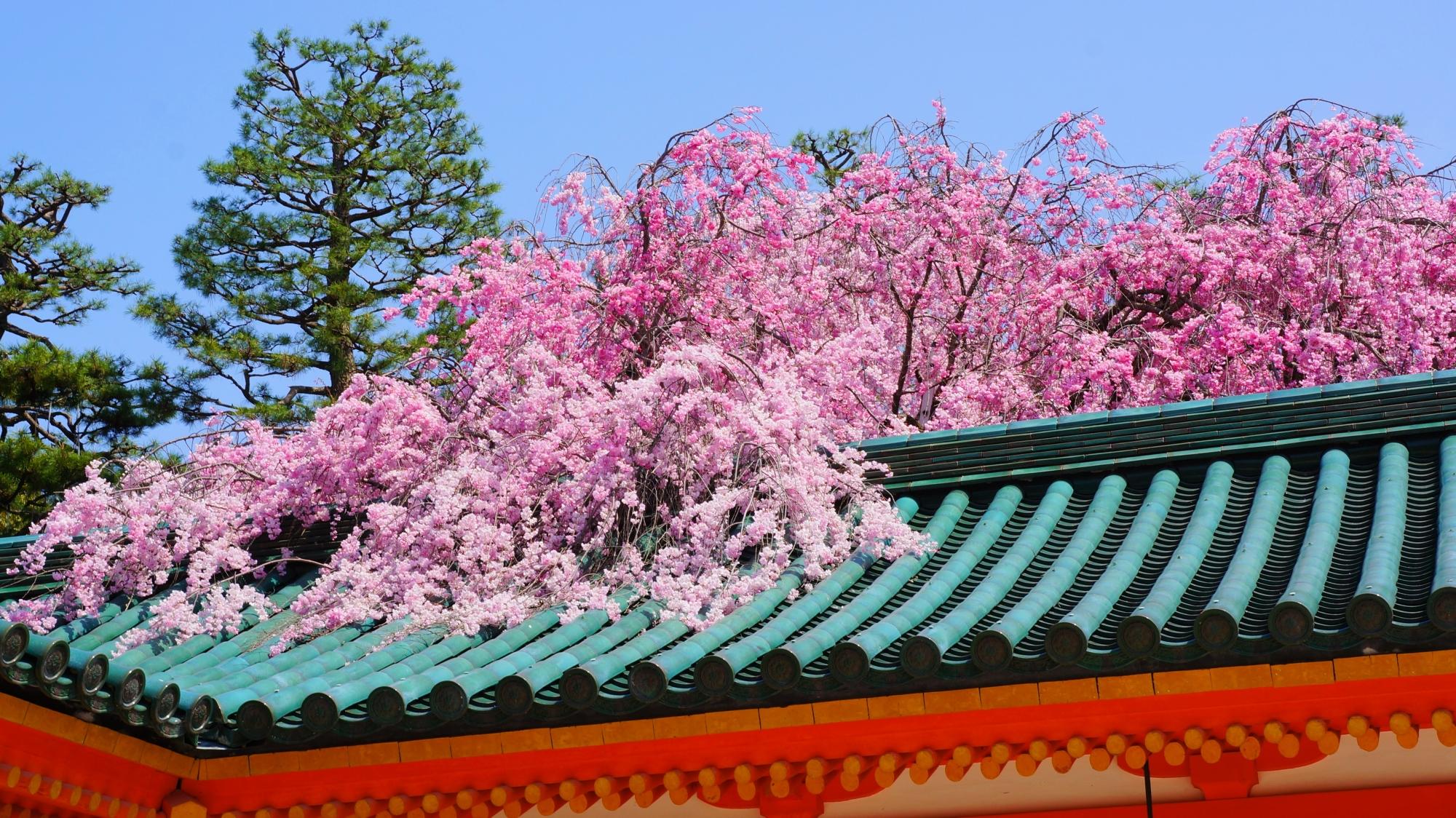 高画質 写真 平安神宮 桜