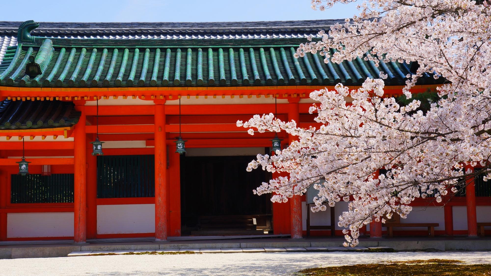 平安神宮の鮮やかな東門に映える雅な桜