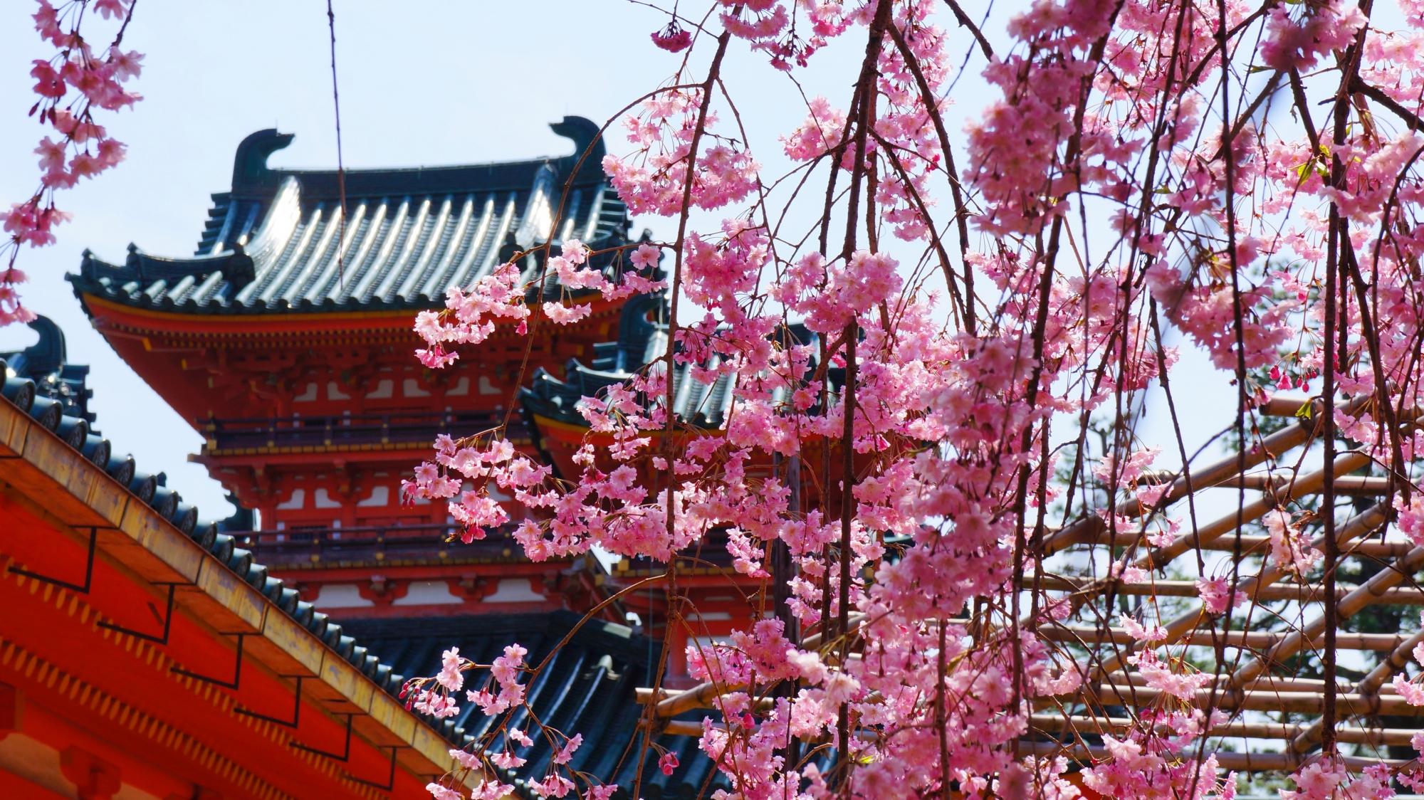 鮮やかな楼閣に絶妙に合うピンクのしだれ桜