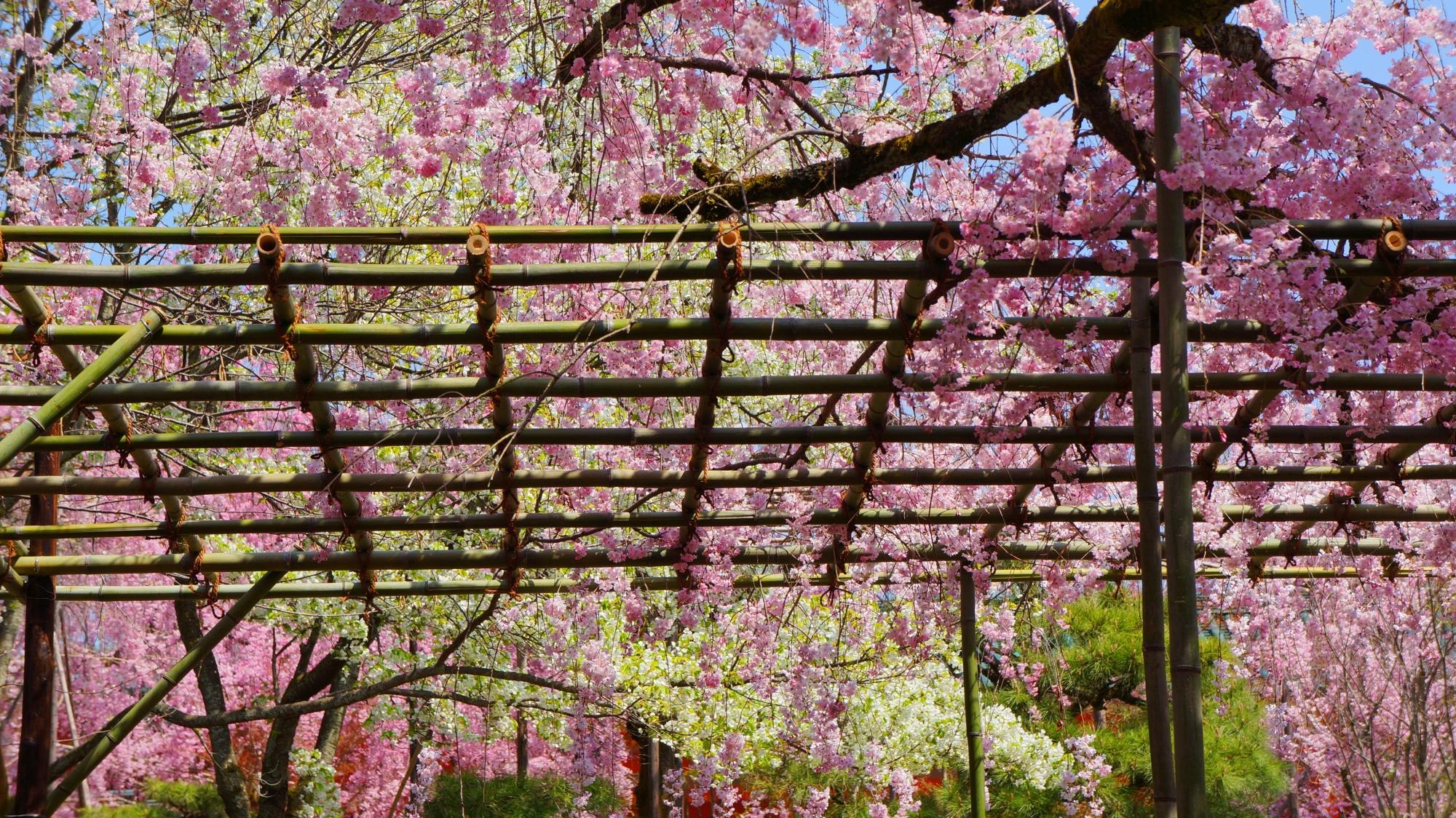 空を覆う華やかな春色