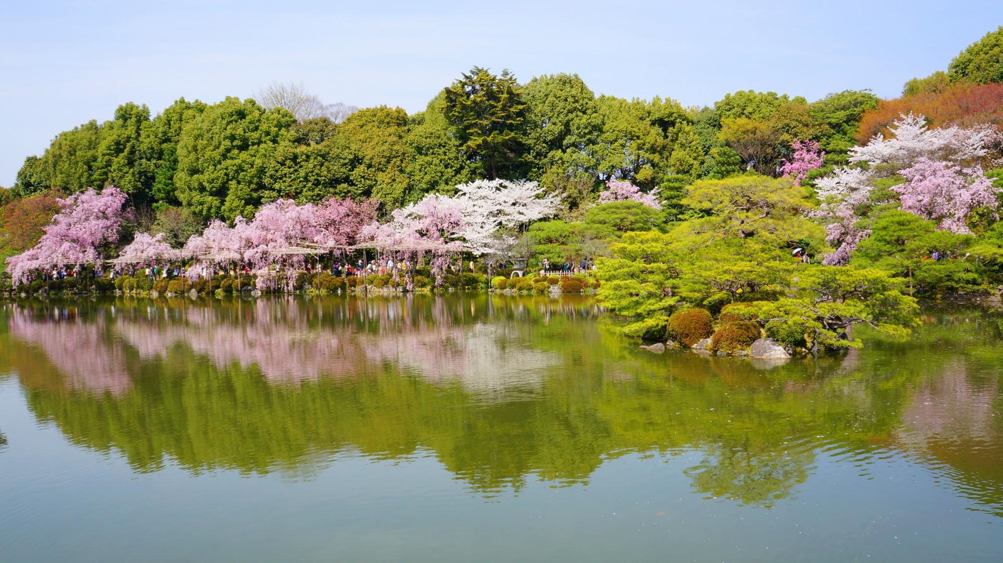 東神苑の柄鳳池(せいほういけ)の桜
