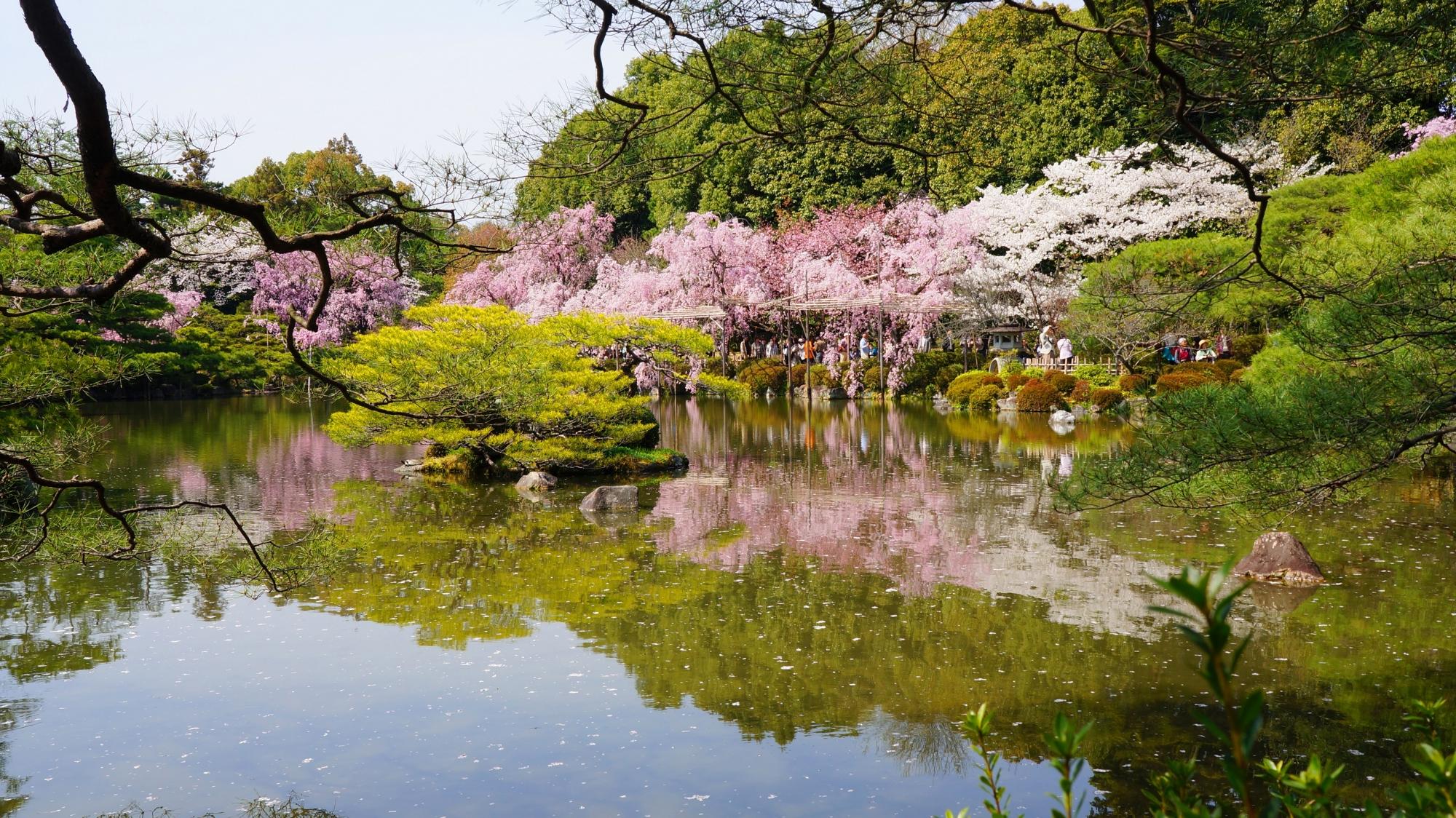 平安神宮神苑の綺麗な桜の水鏡
