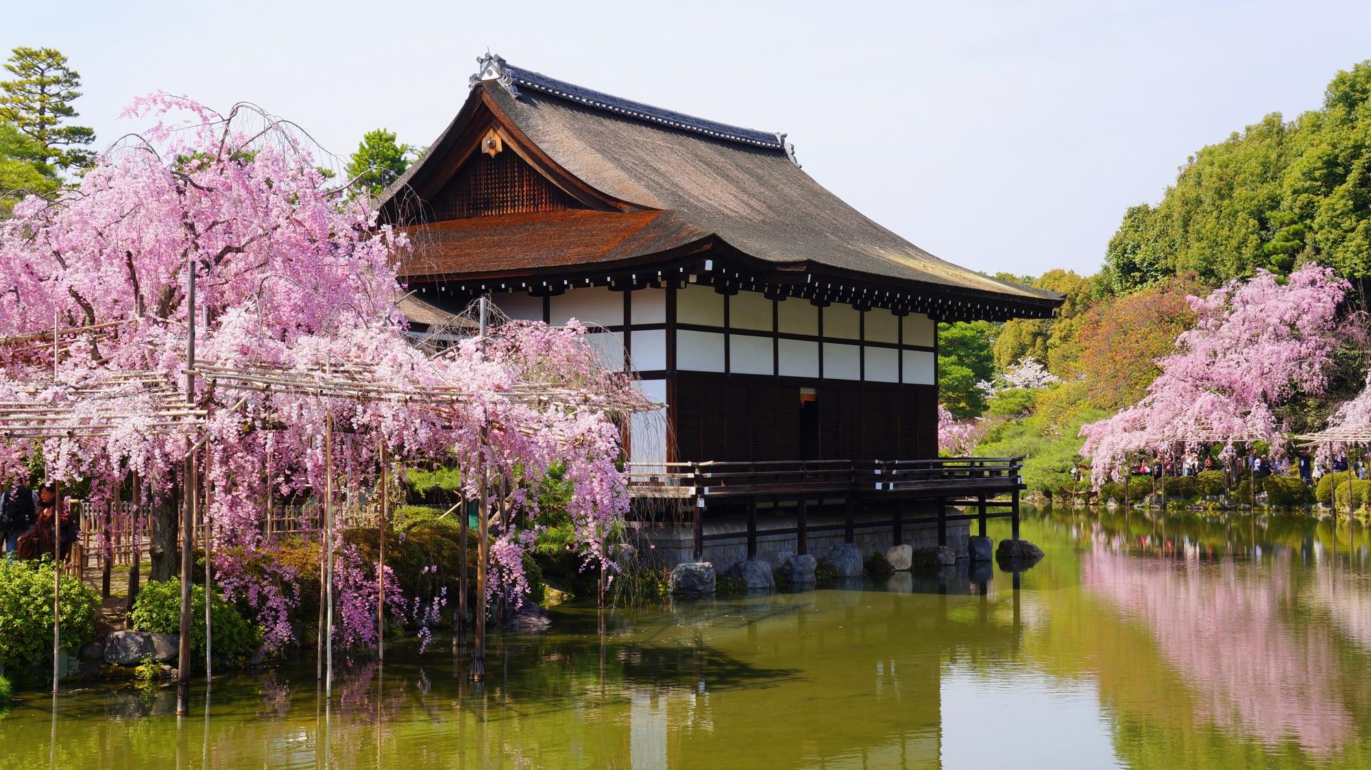 上品な尚美館を華やかに彩る桜