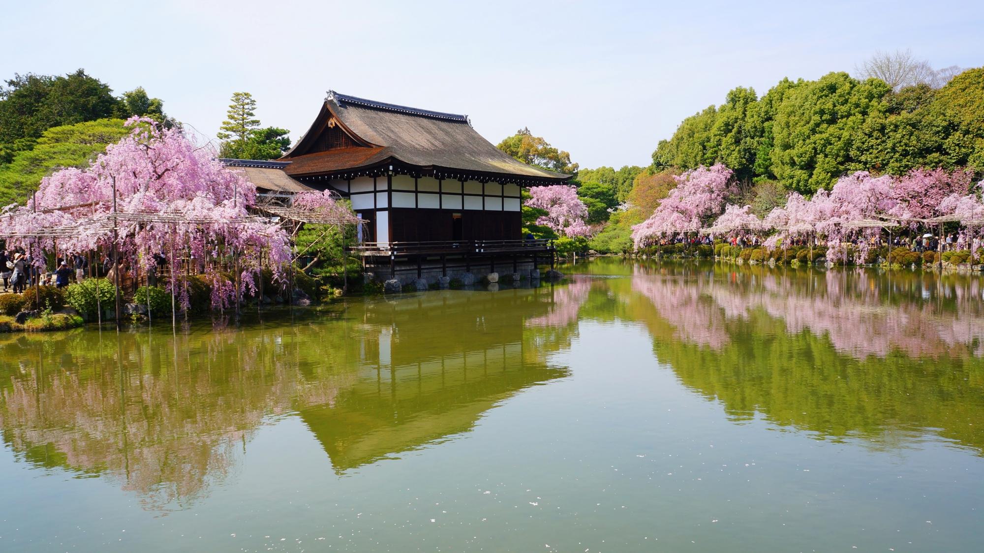 尚美館(しょうびかん)(貴賓館)と桜