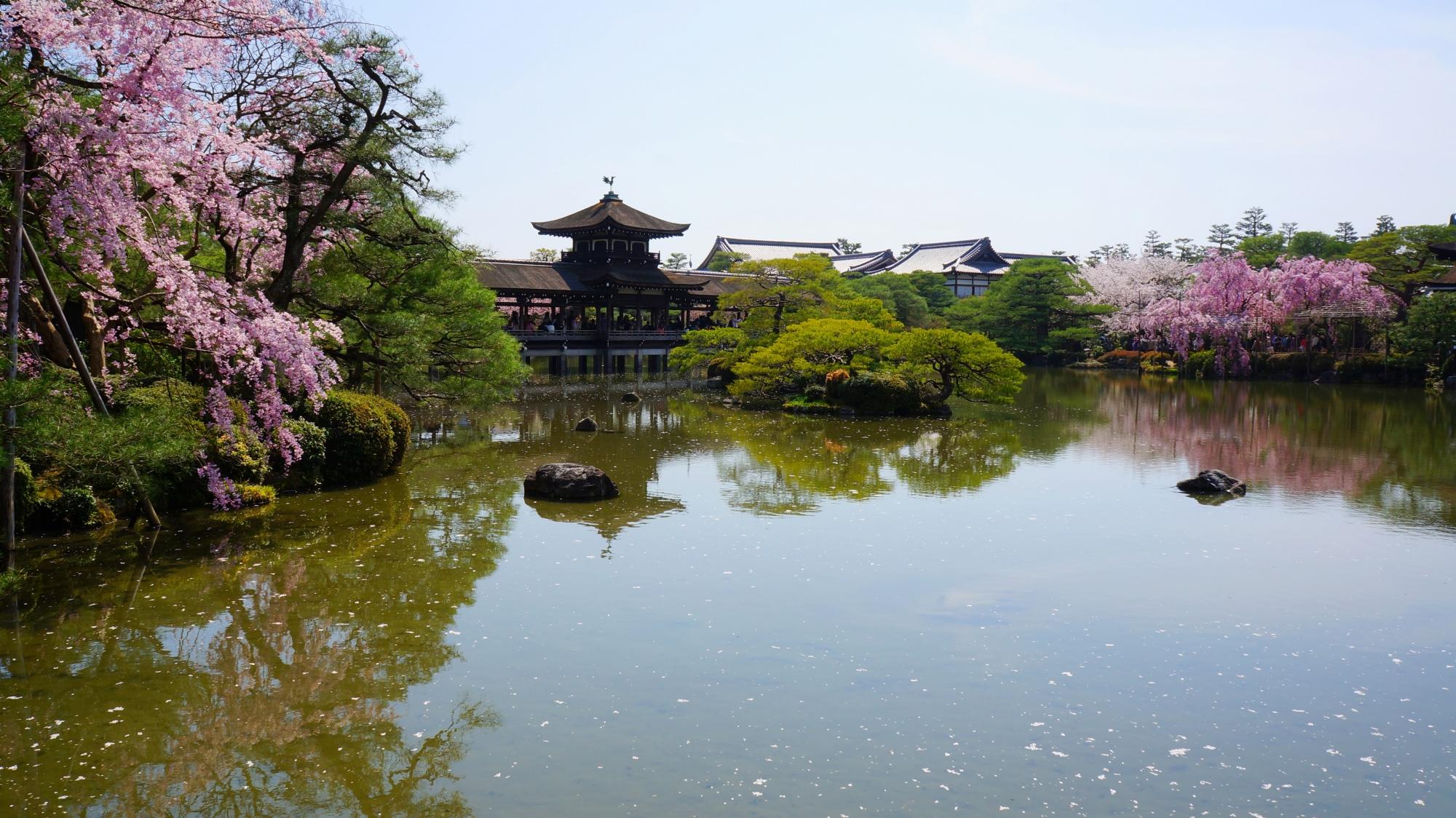 泰平閣(たいへいかく)(橋殿)と桜