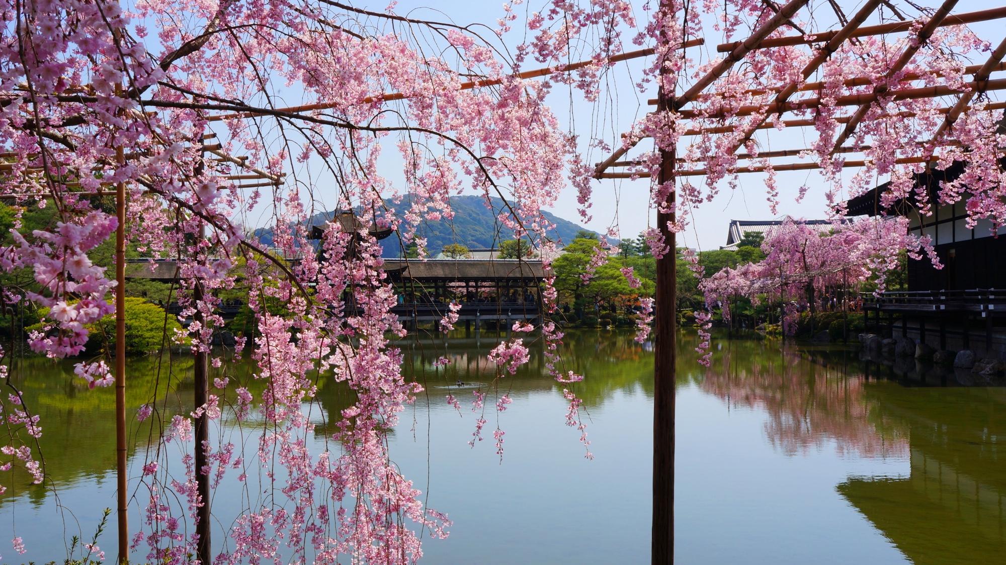 優雅に咲き誇るピンクの花