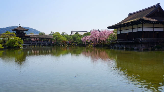 Kyoto Heianjingu-Shrine Garden weeping cherry tree spring へいあんじんぐう 泰平閣 尚美館 春