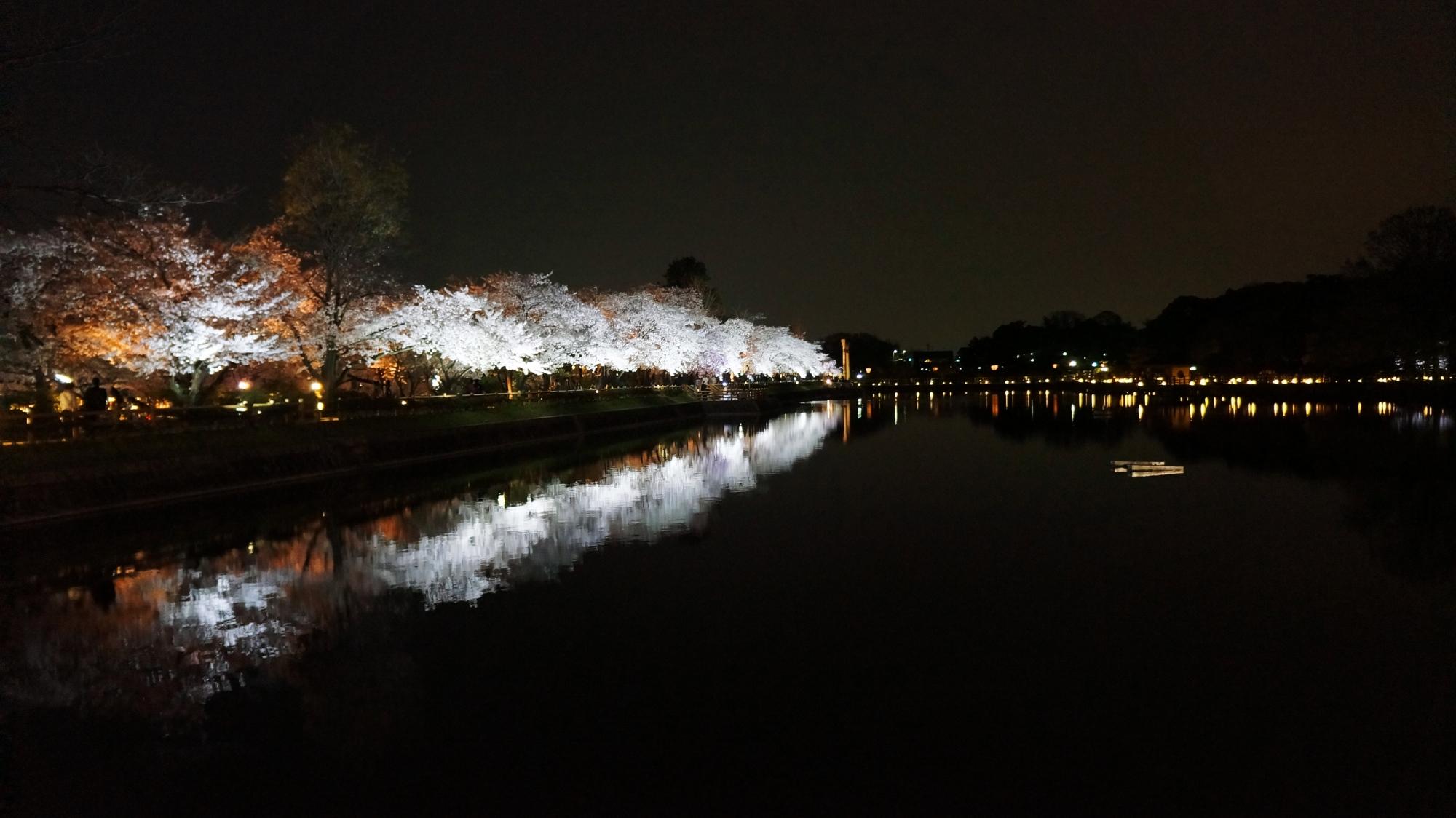 八条ヶ池の東側の畔の桜並木