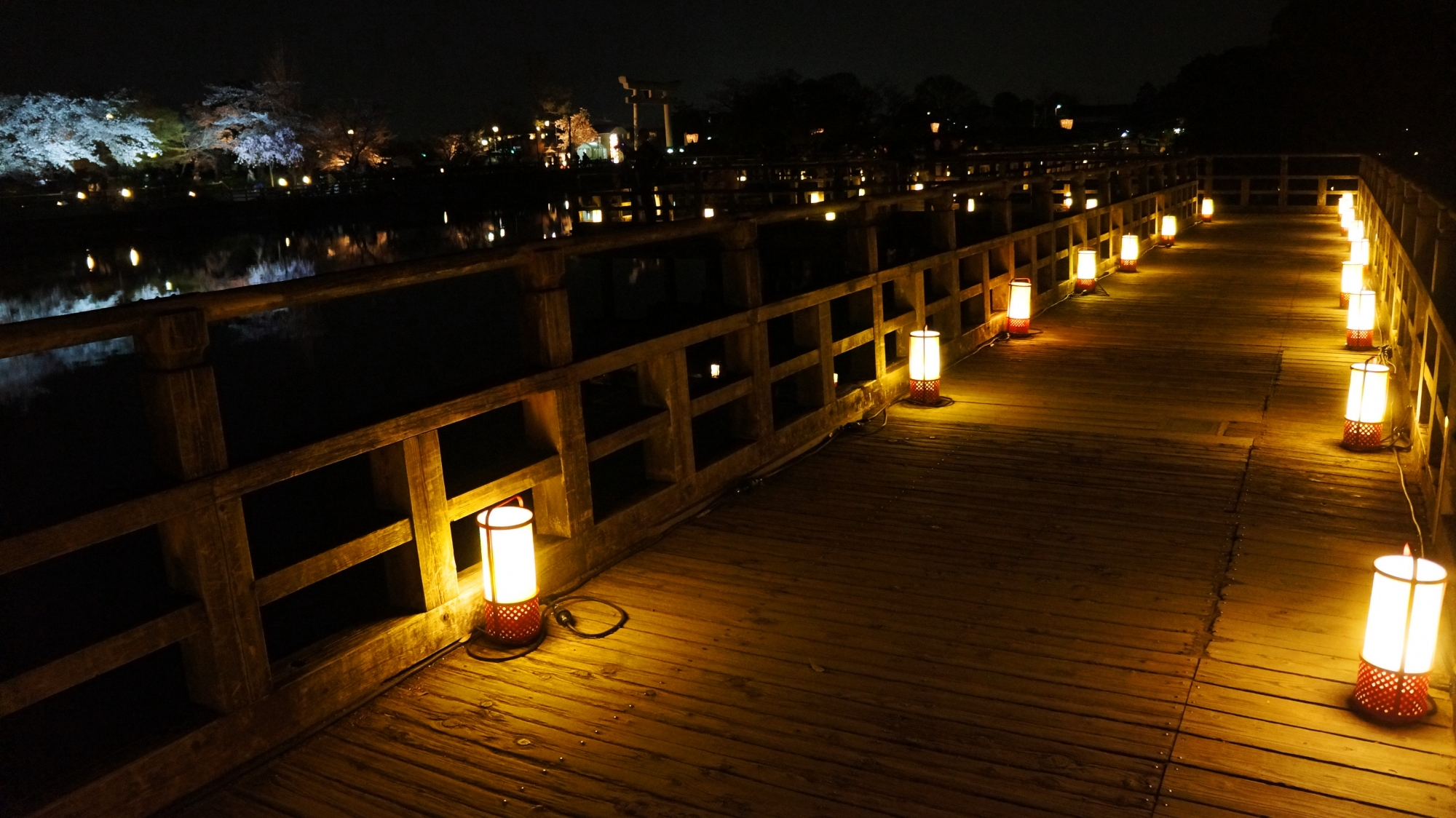 風情と華やかさのある夜桜ライトアップ