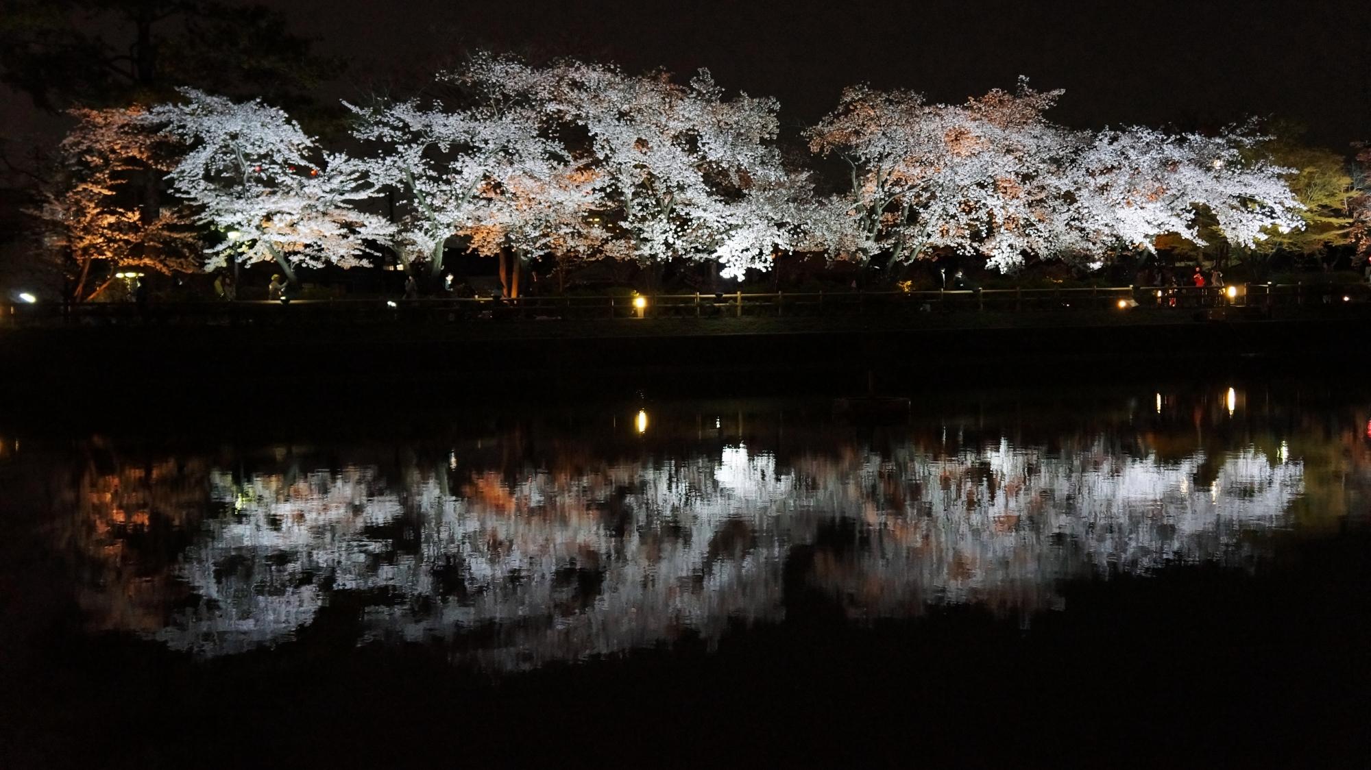 八条が池の綺麗な夜桜の水鏡