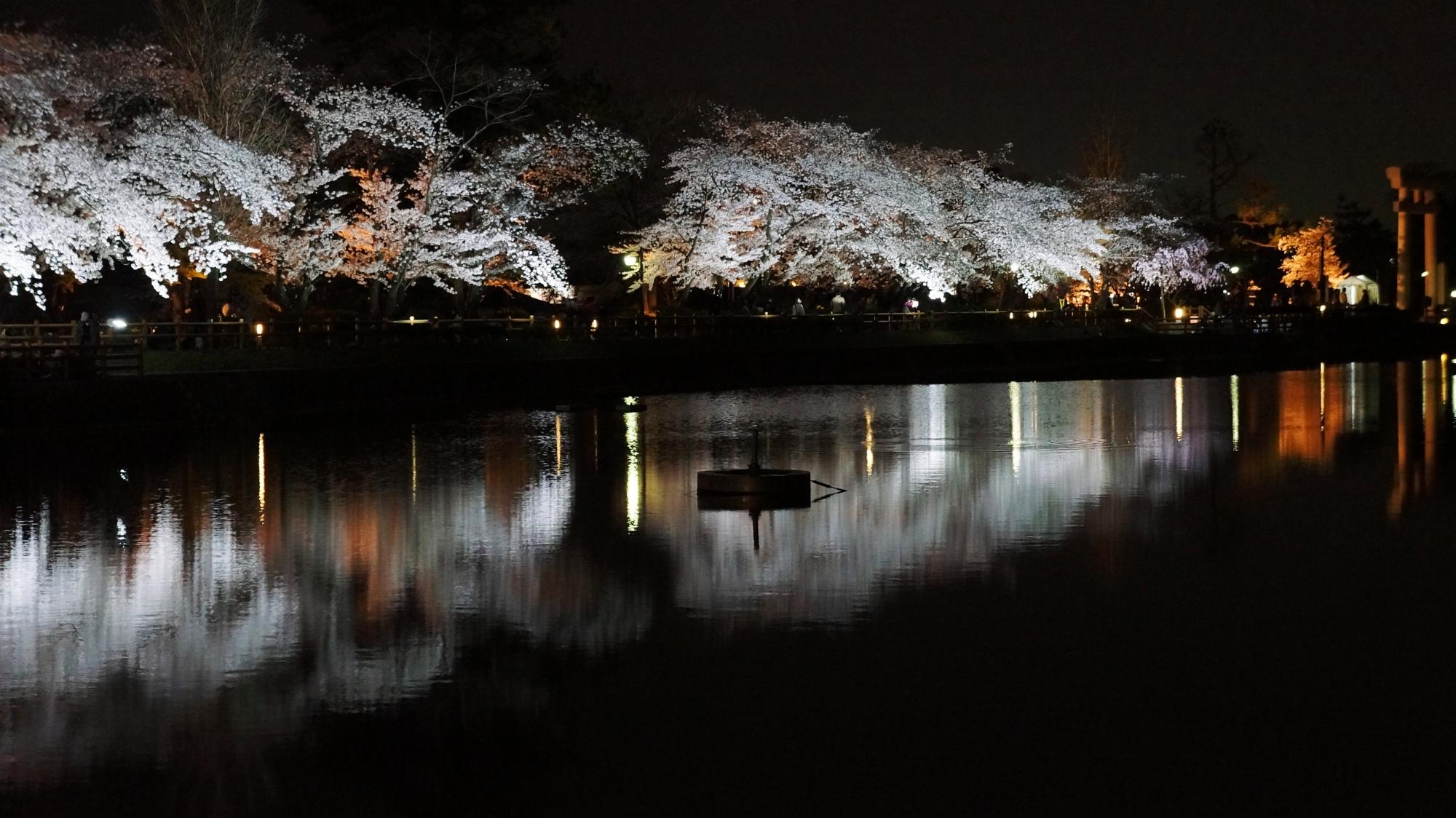 闇夜と水面に浮かび上がる華やかな夜桜