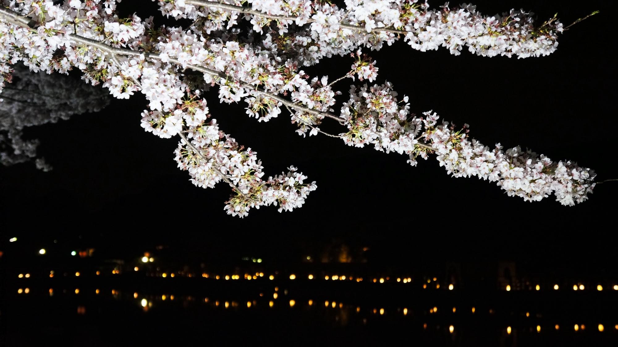 水面にせり出すライトアップされて輝く桜