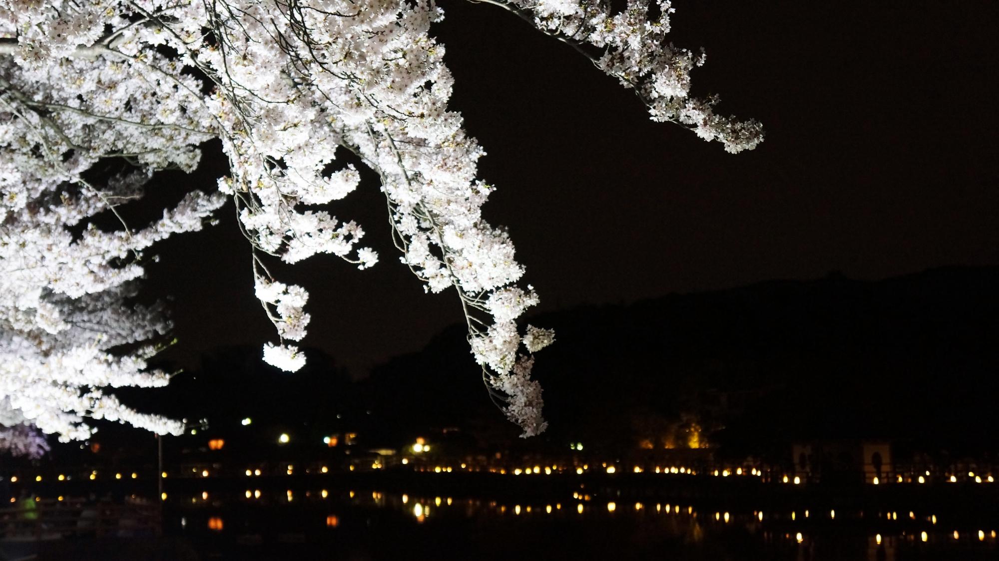 闇夜を華やかな春色に彩る桜