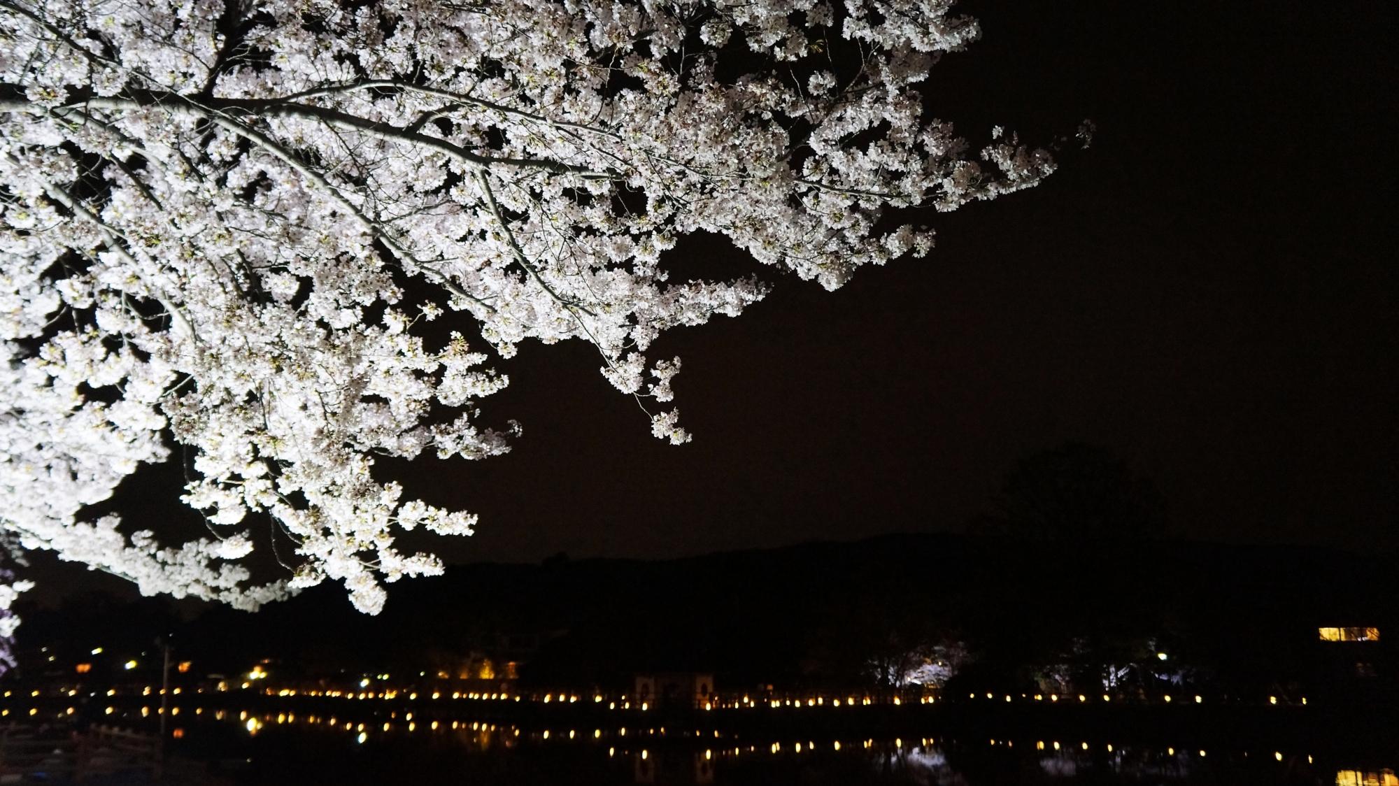 下から眺めた長岡天満宮の満開の夜桜