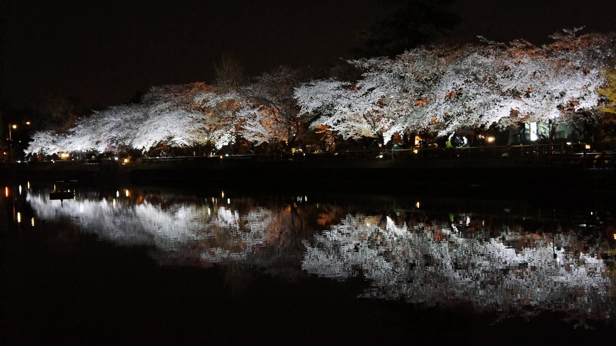 夜の水辺を彩る豪快に咲き誇る桜