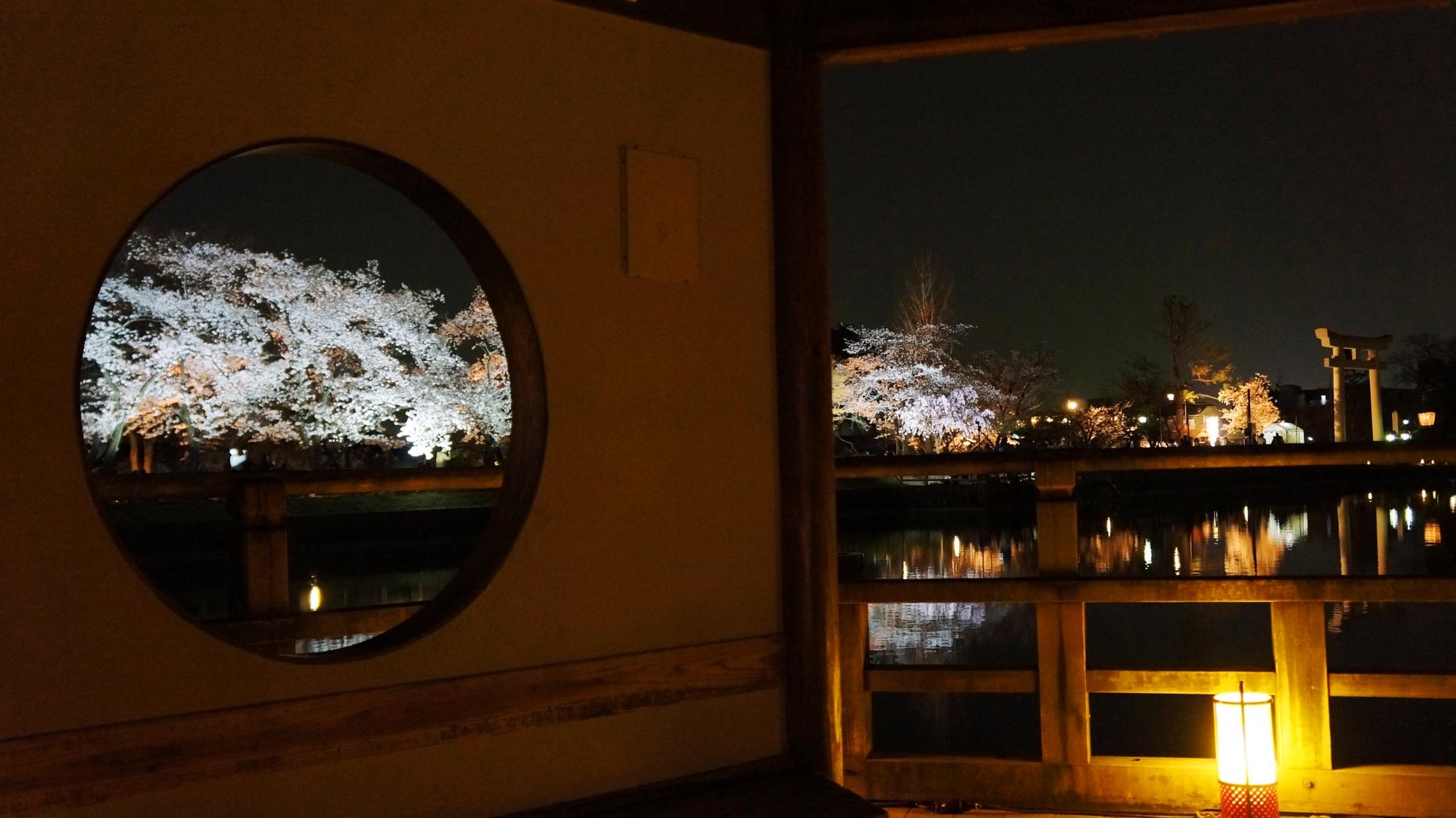 六角舎の中から眺めた夜桜ライトアップ