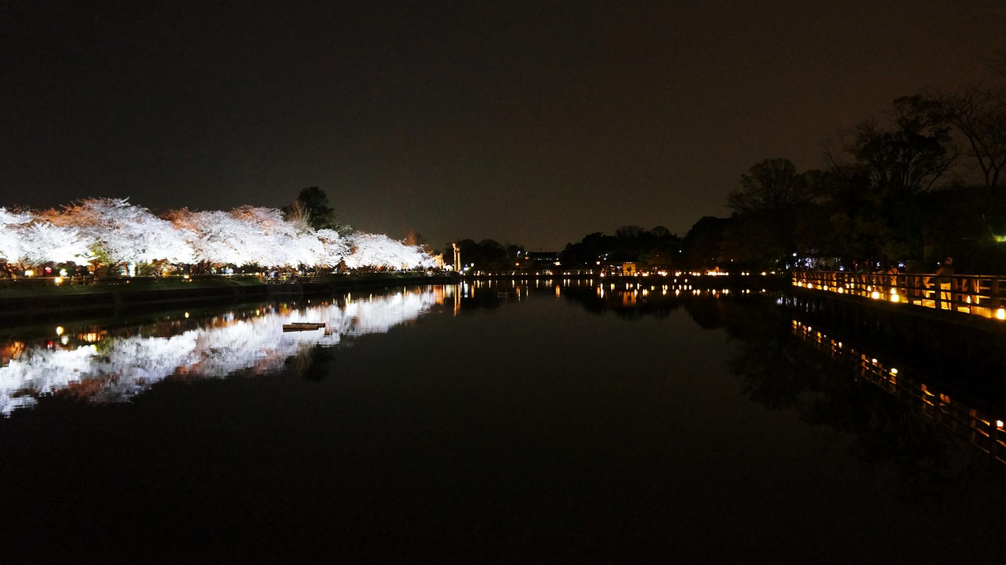 長岡天満宮の素晴らしい夜桜ライトアップと春の情景