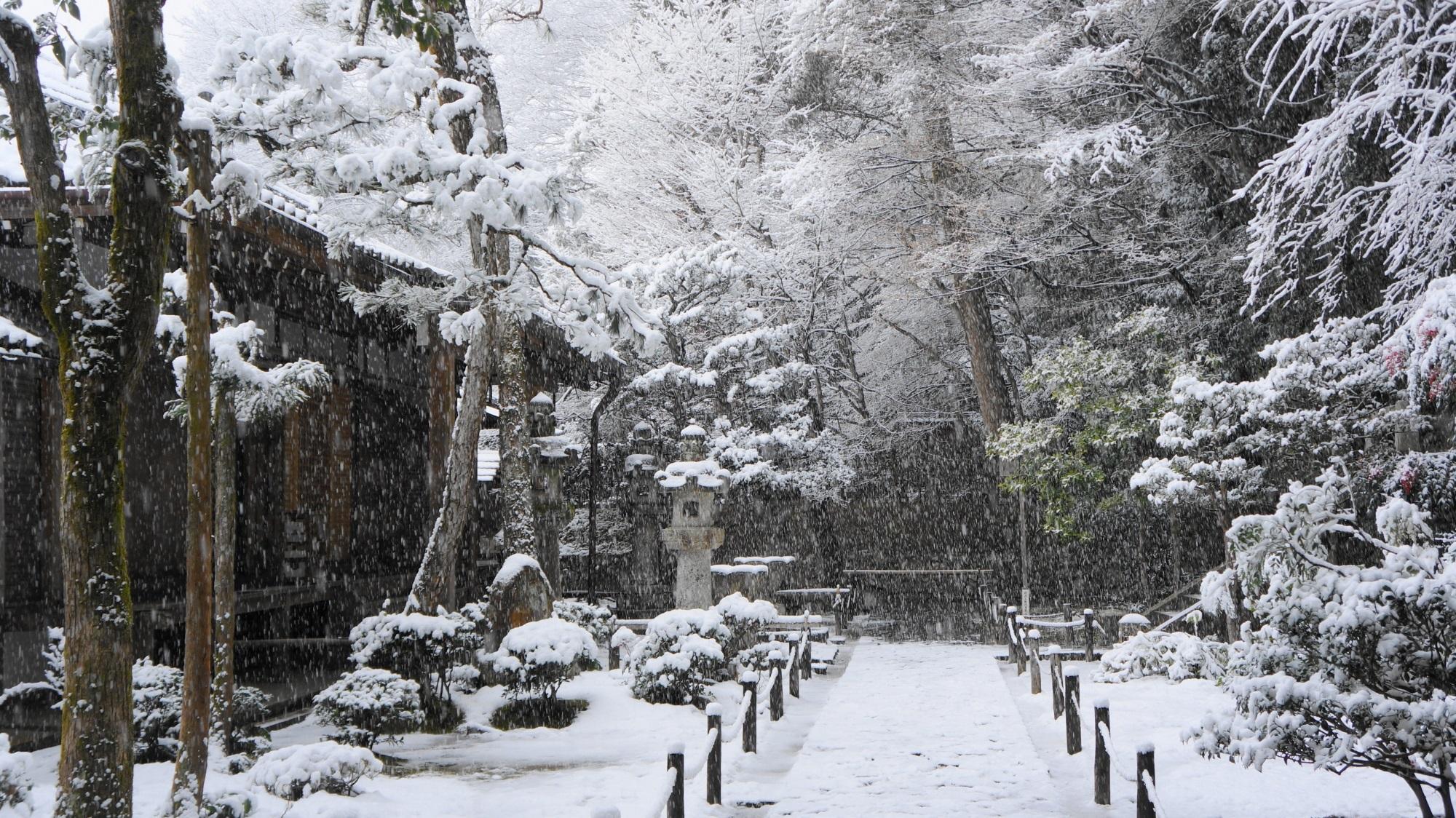 法然院の本堂前の雪景色