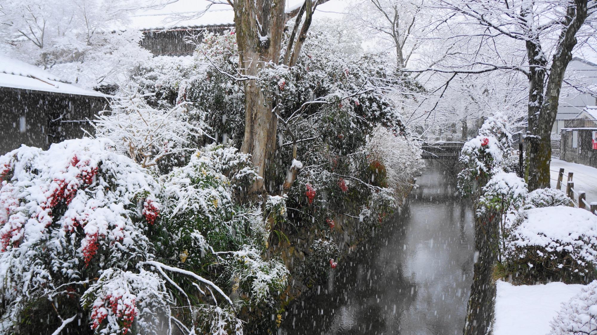 周辺の家々や木々も雪につつまれた哲学の道