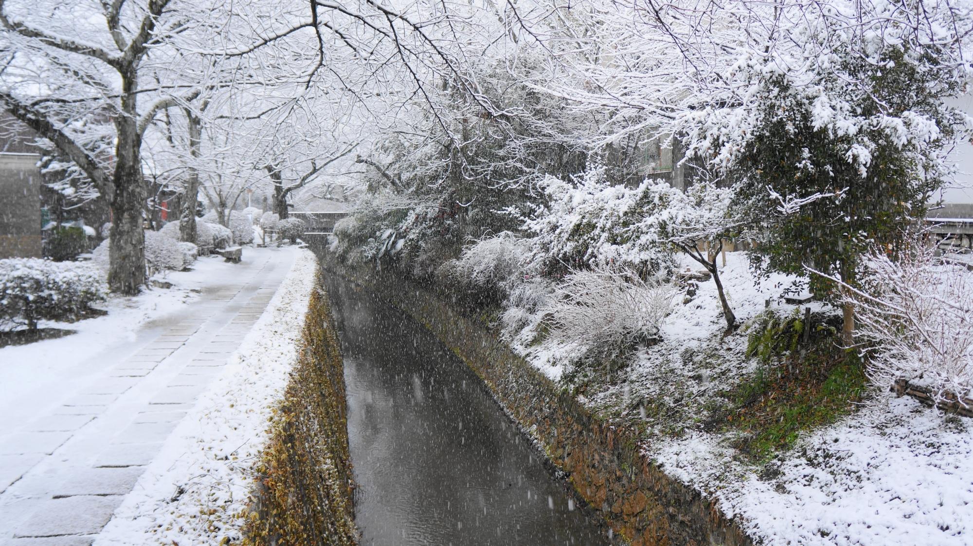 真っ白に雪化粧した哲学の道