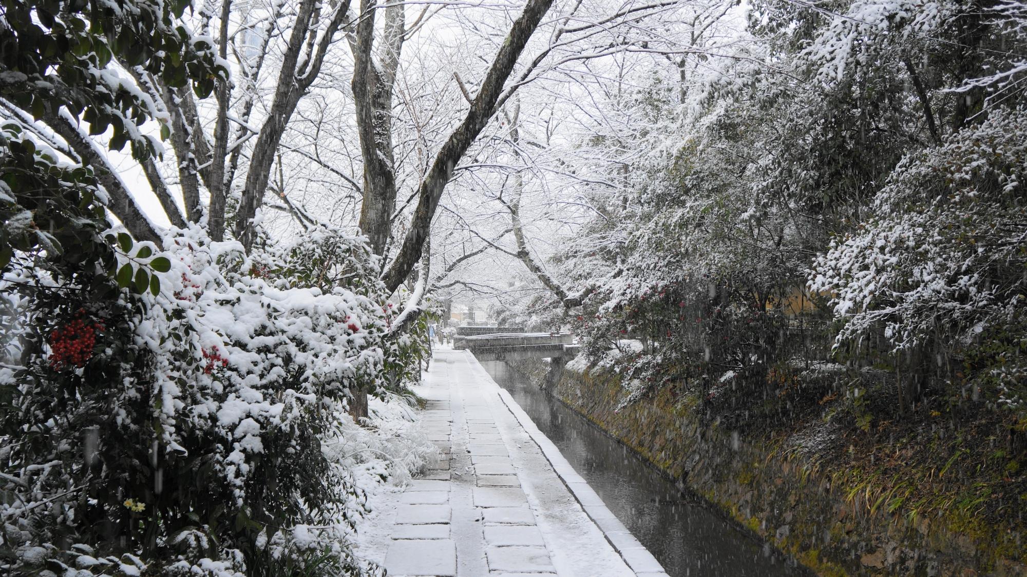 静寂につつまれたしんしんと雪が降り積もる哲学の道