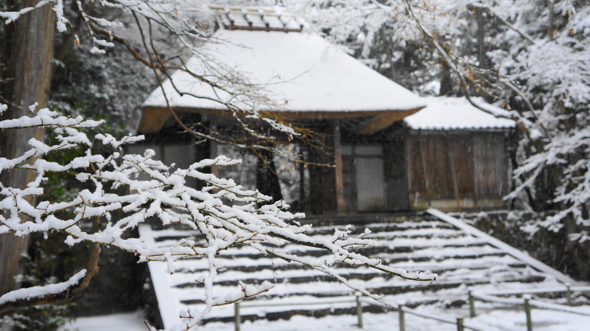 枝先まで雪が積もった木