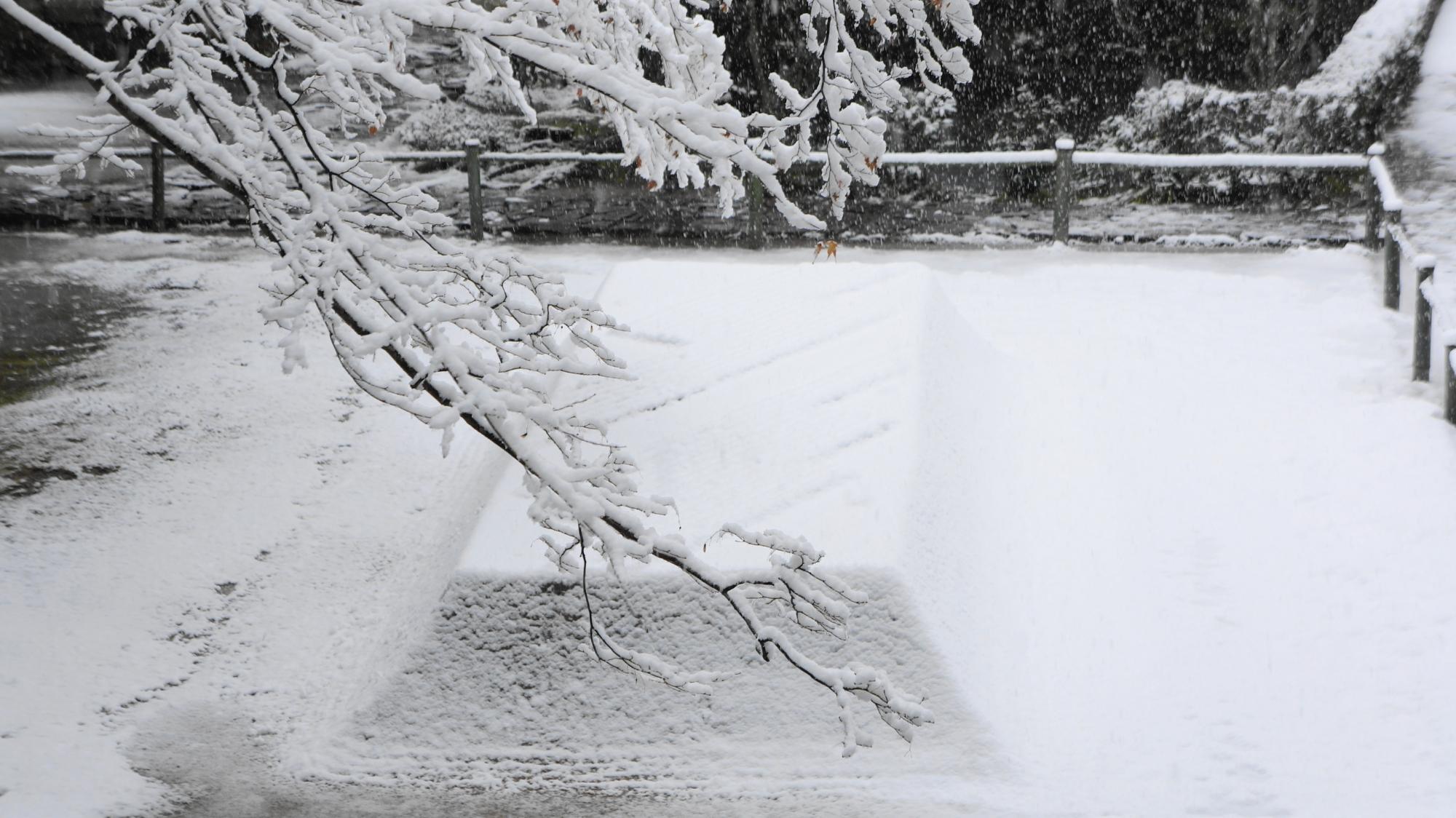 満開の雪の花と雪の白砂壇