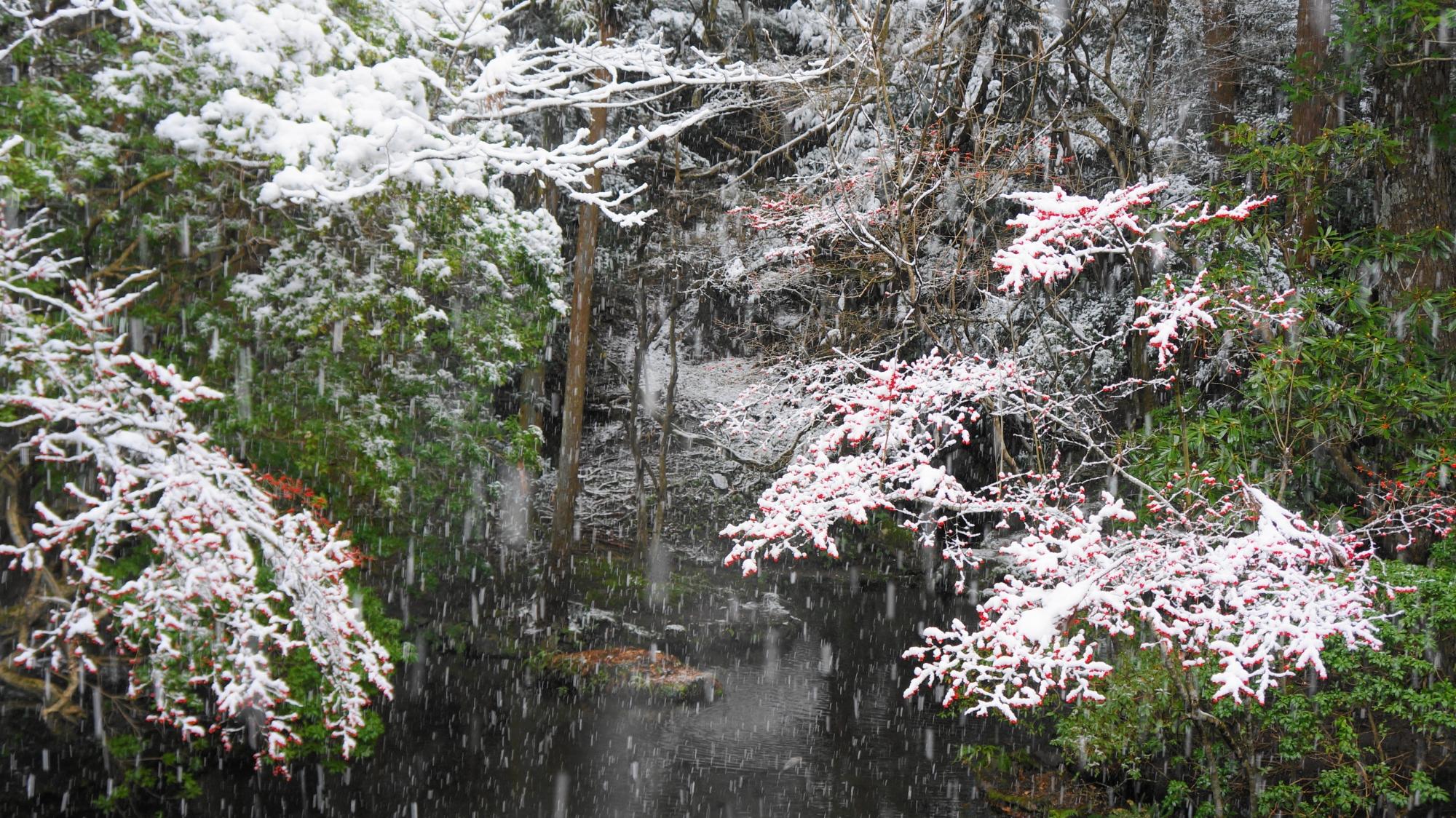 雪の積もっていない部分の緑と雪の白の綺麗なコントラスト