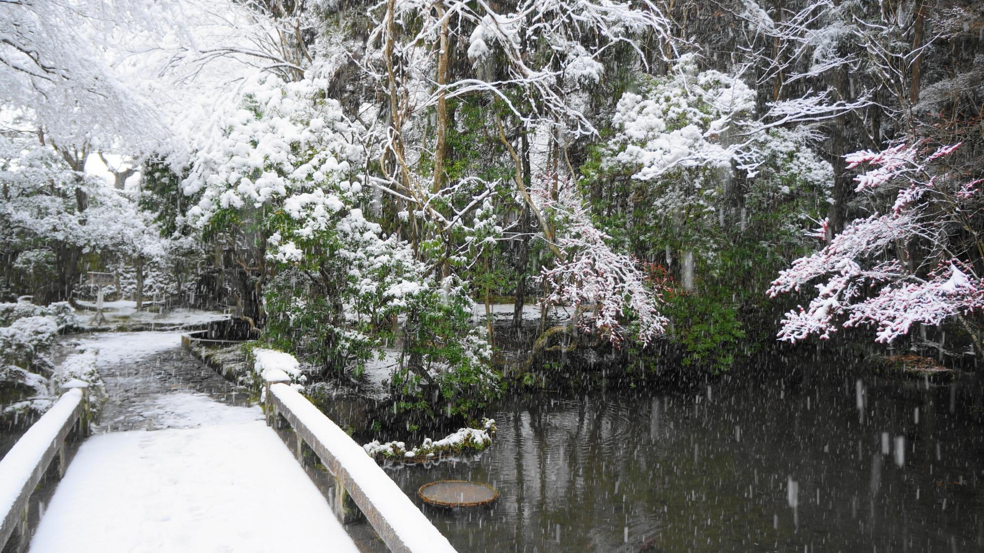 雪化粧した多種多様な木々や植物