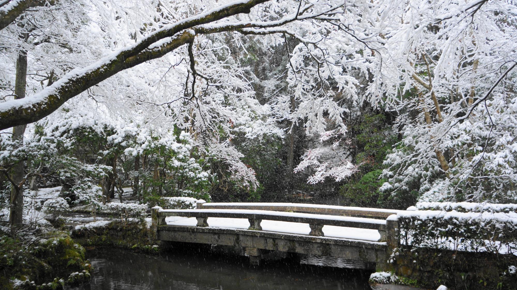 法然院の放生池の雪景色