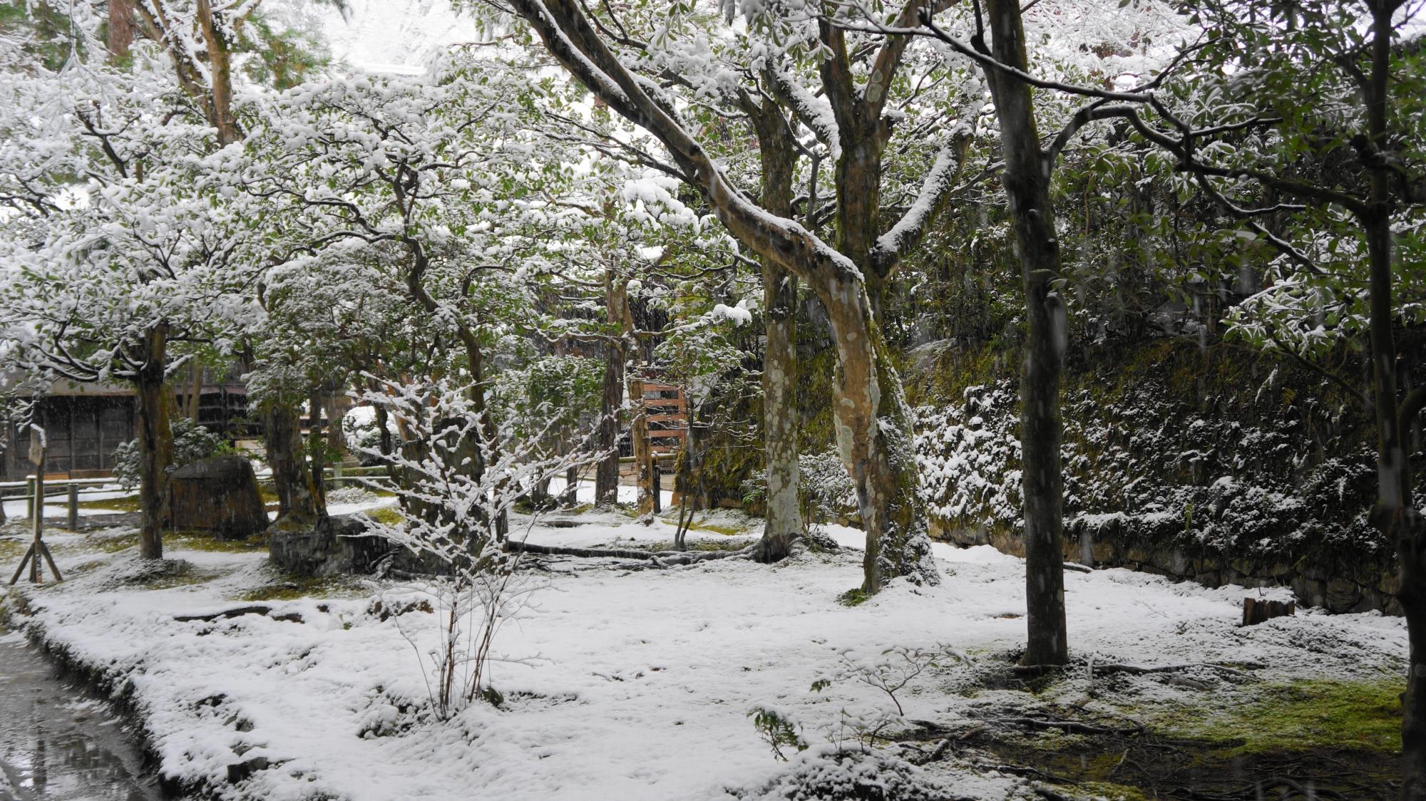 法然院の表玄関横の雪景色