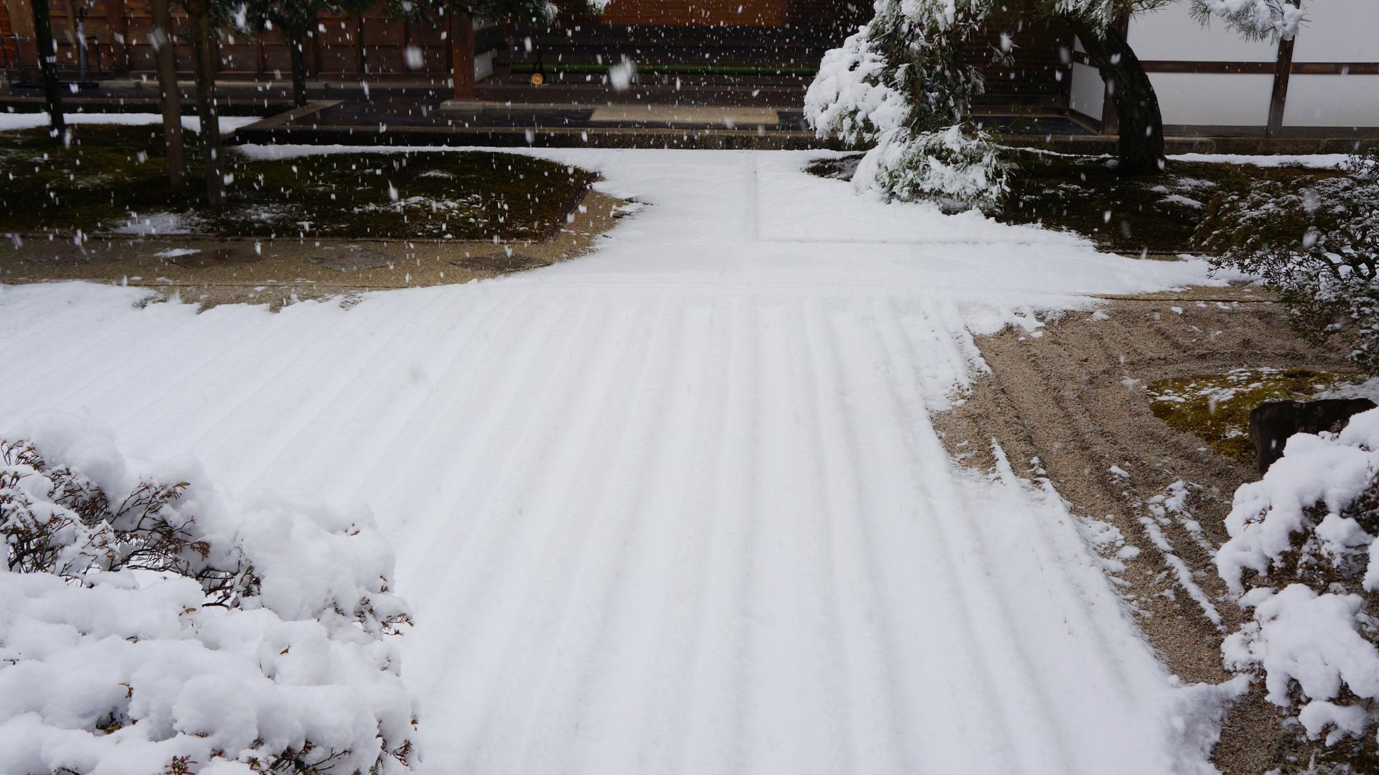 砂の模様を象って見事に積もる雪