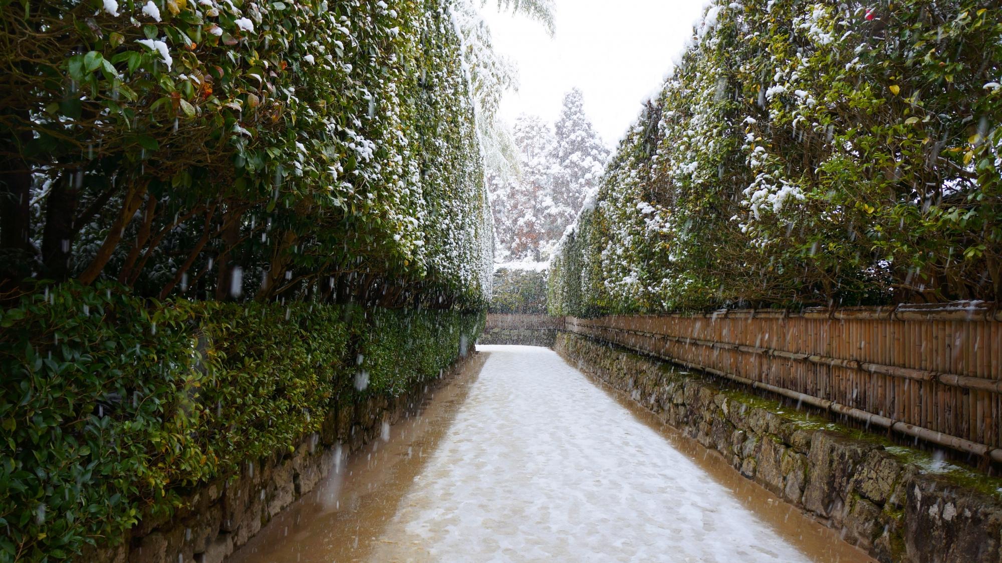 銀閣寺垣の雪景色
