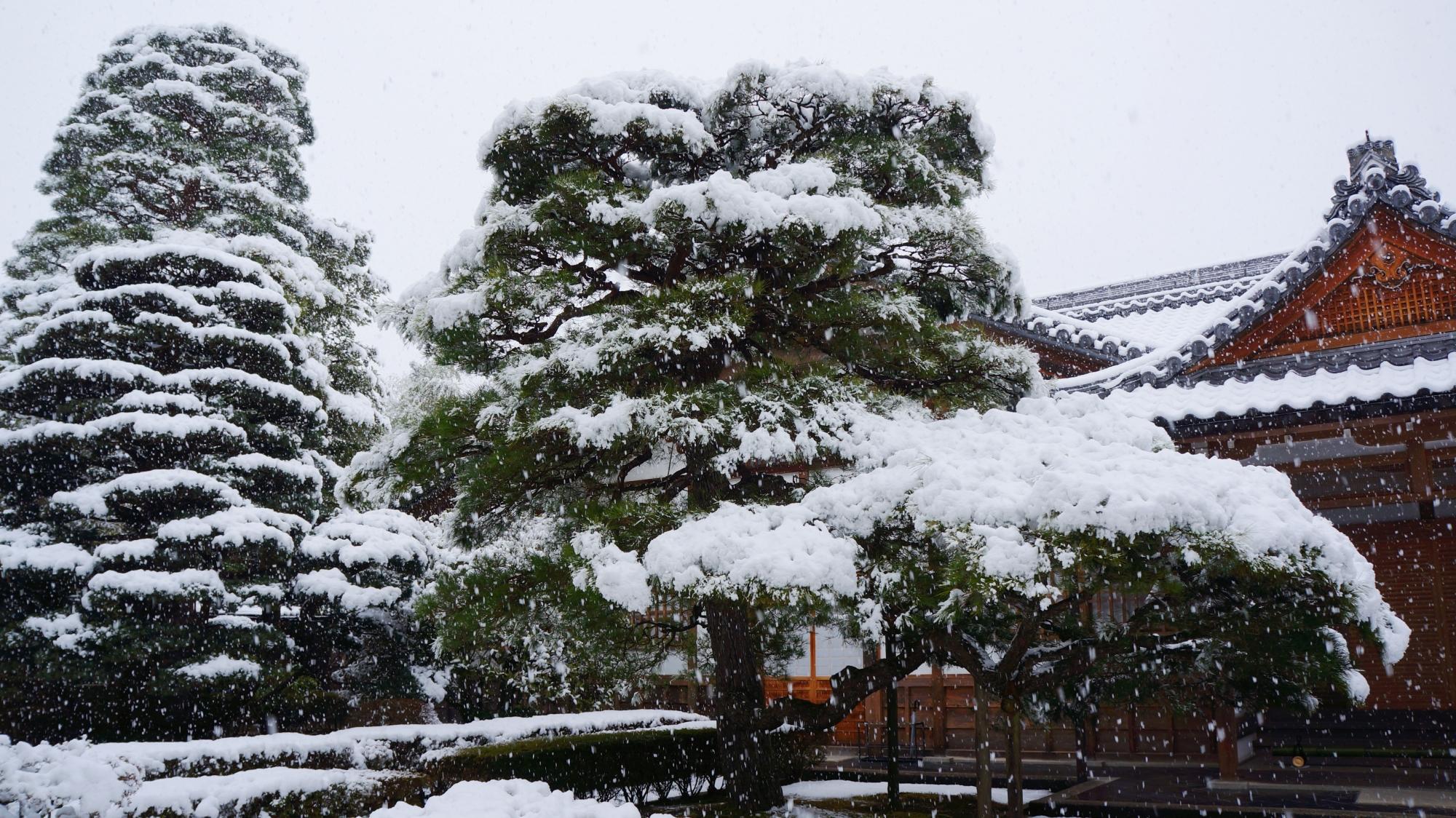 雪が強くなり木々が白くそまる銀閣寺