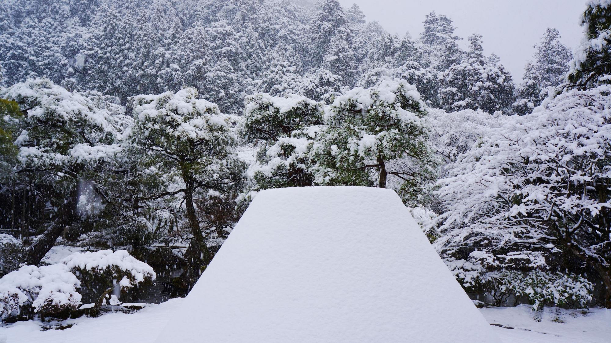 向月台の雪景色