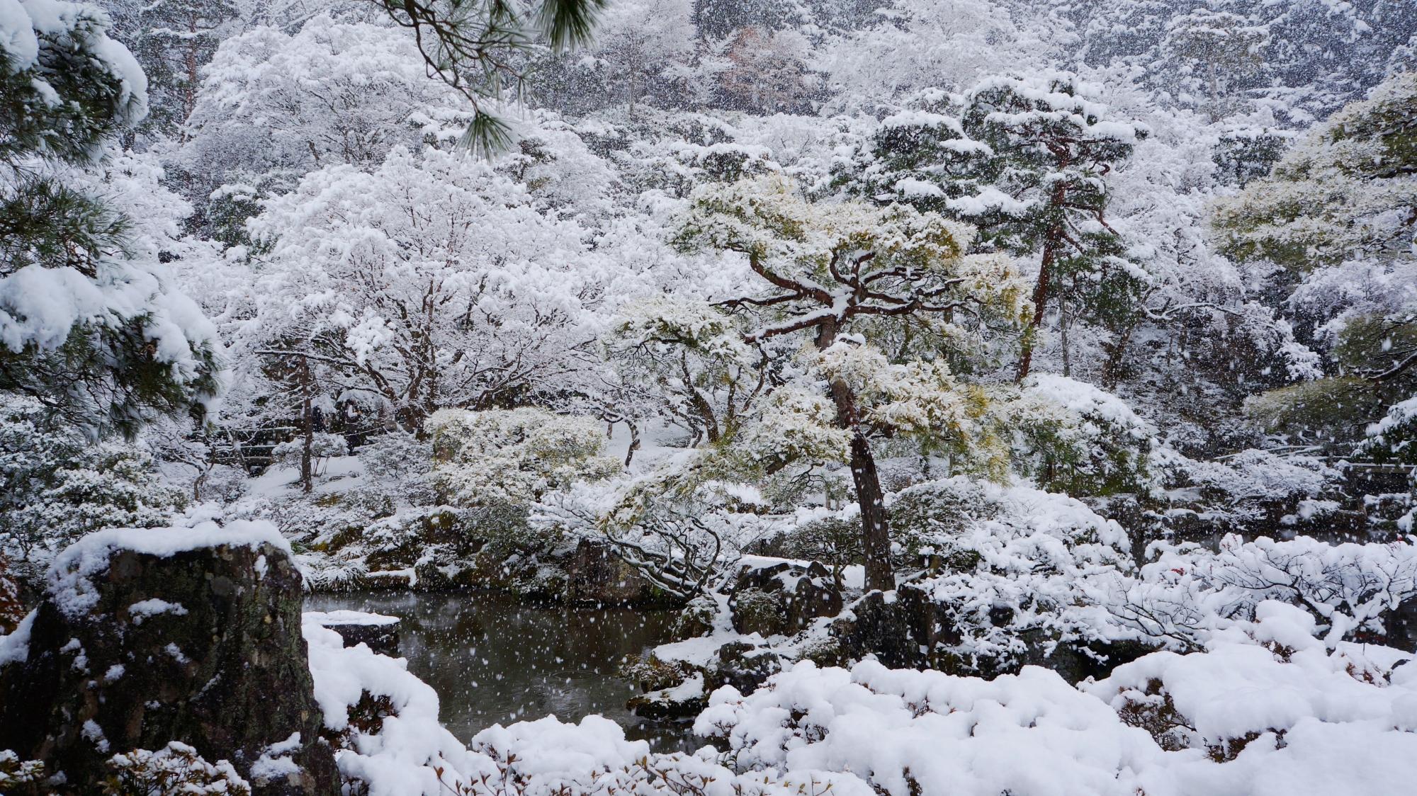 見事に雪化粧した多種多様な木々や植物