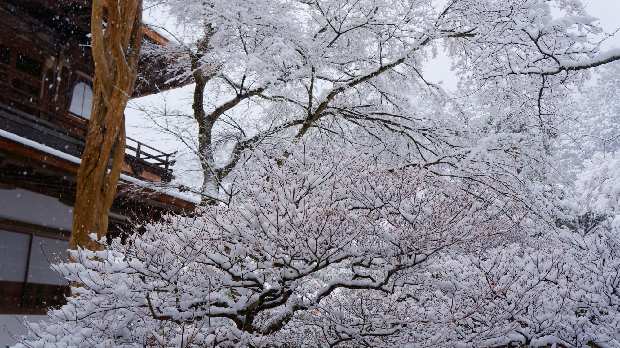華やかな白い雪の花が咲く銀閣寺