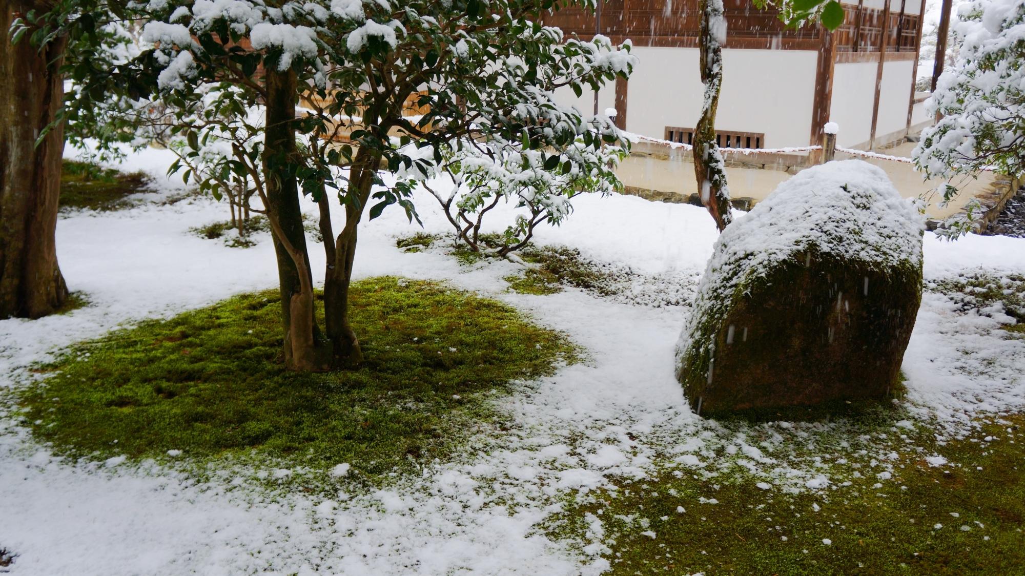 銀閣寺の雪の白と苔の緑の綺麗なコントラスト
