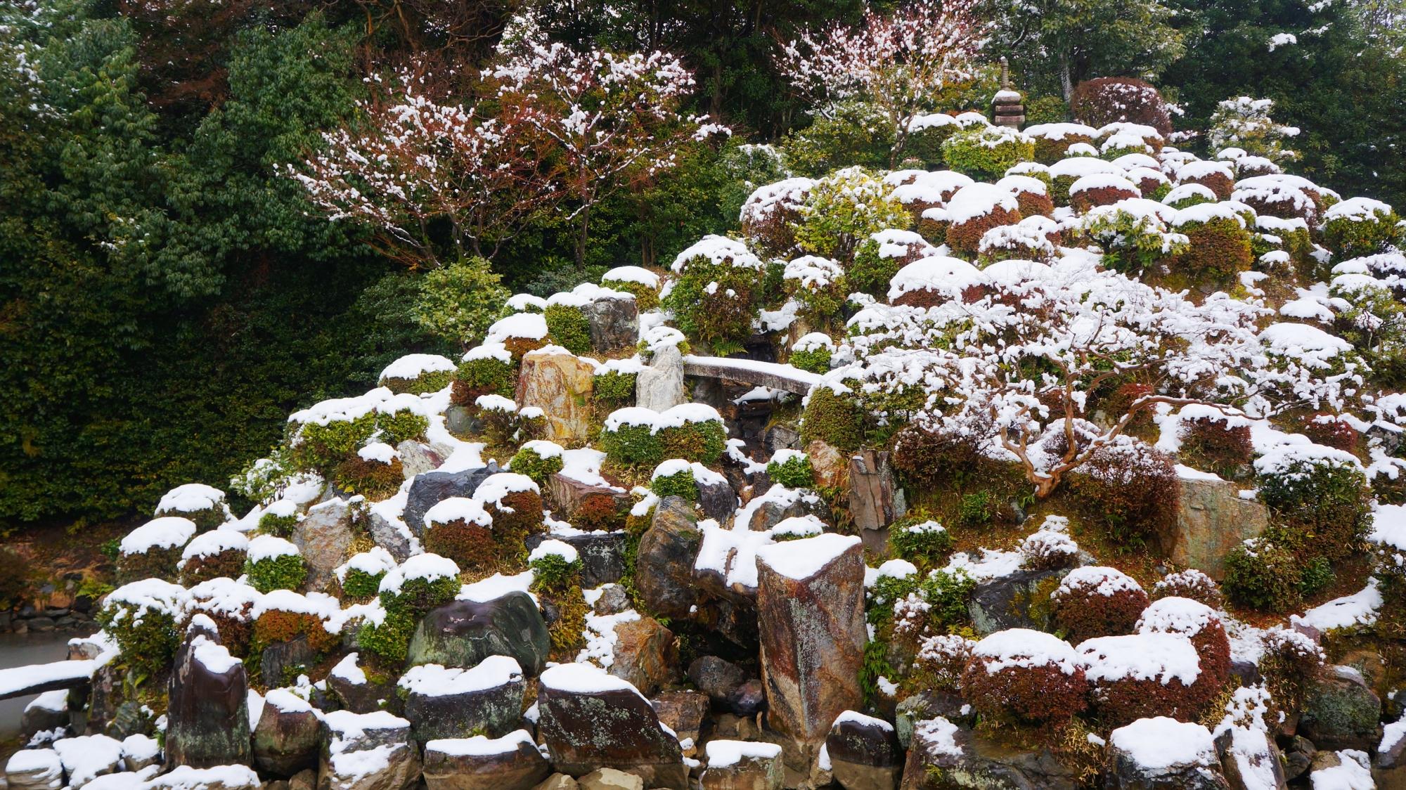 たくさんの岩やサツキの刈り込みが配された雪の庭園